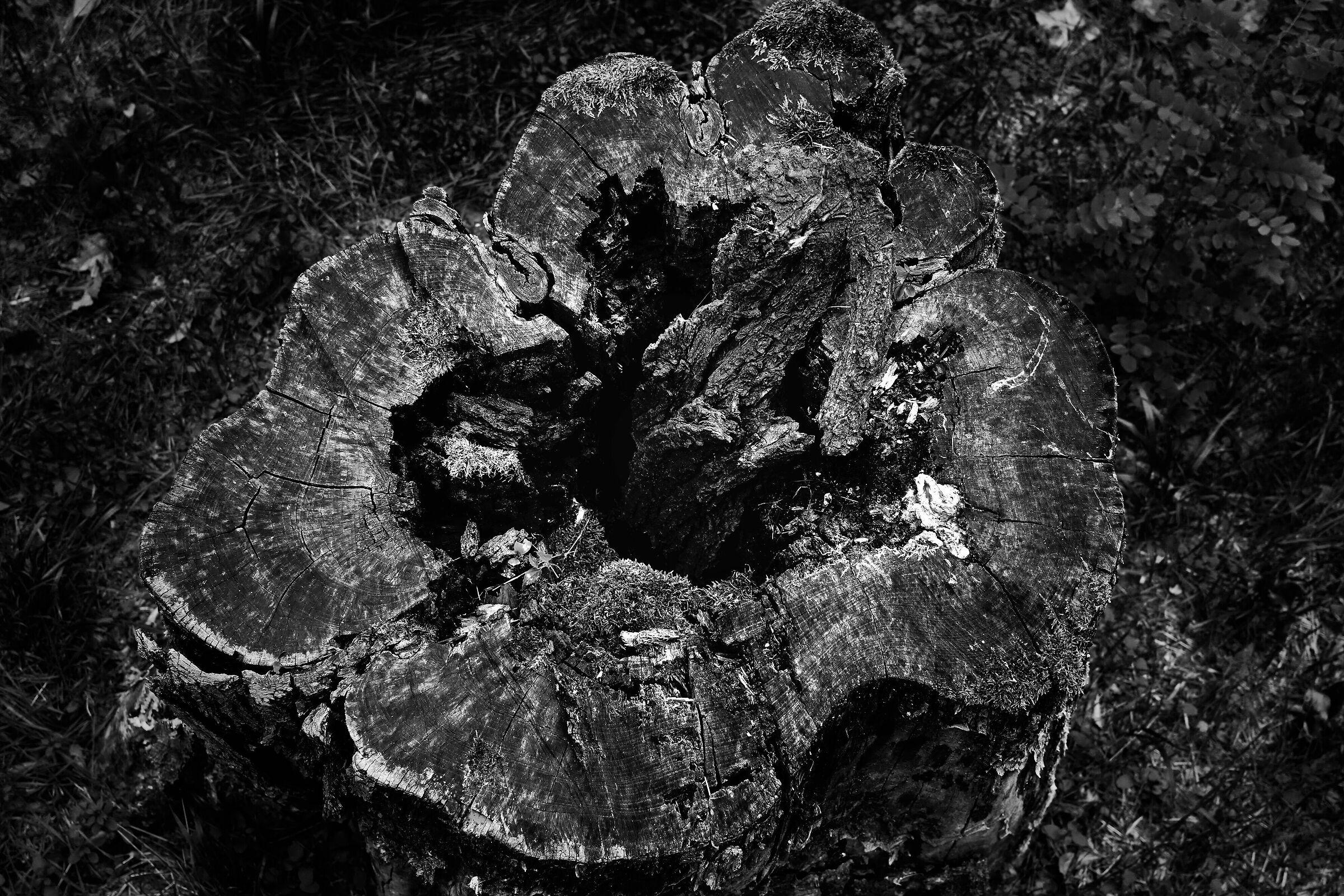 Tree Casing 3...