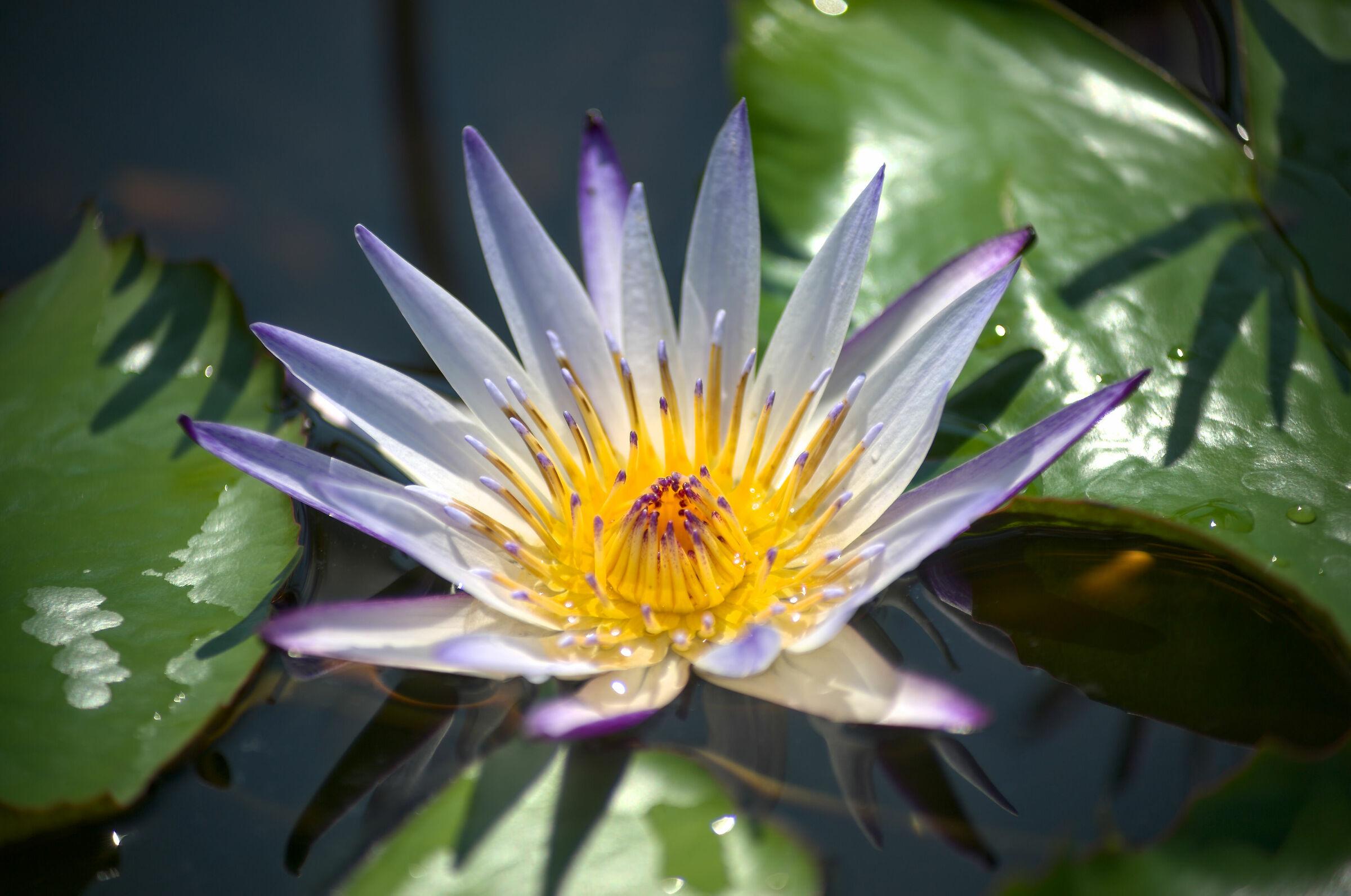 Star-studded loto...