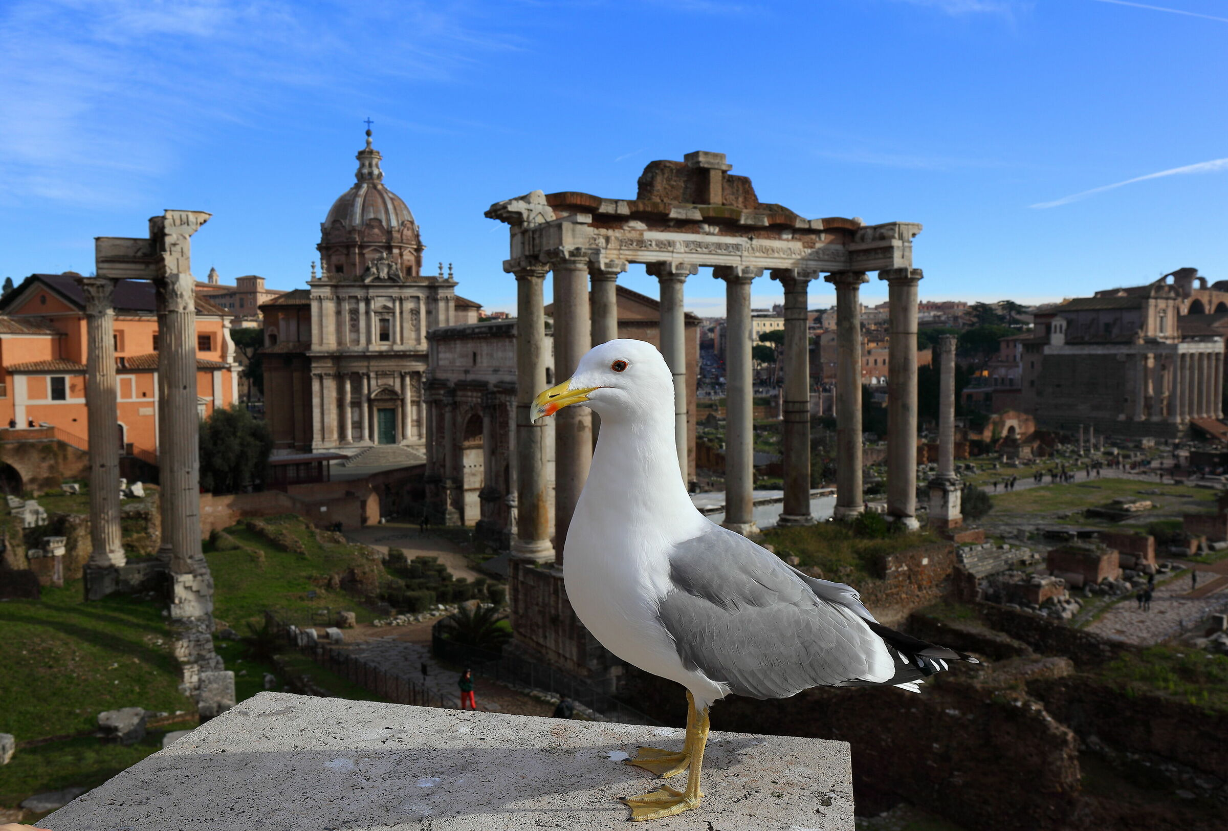 Seagull posing at the Imperial Forums...