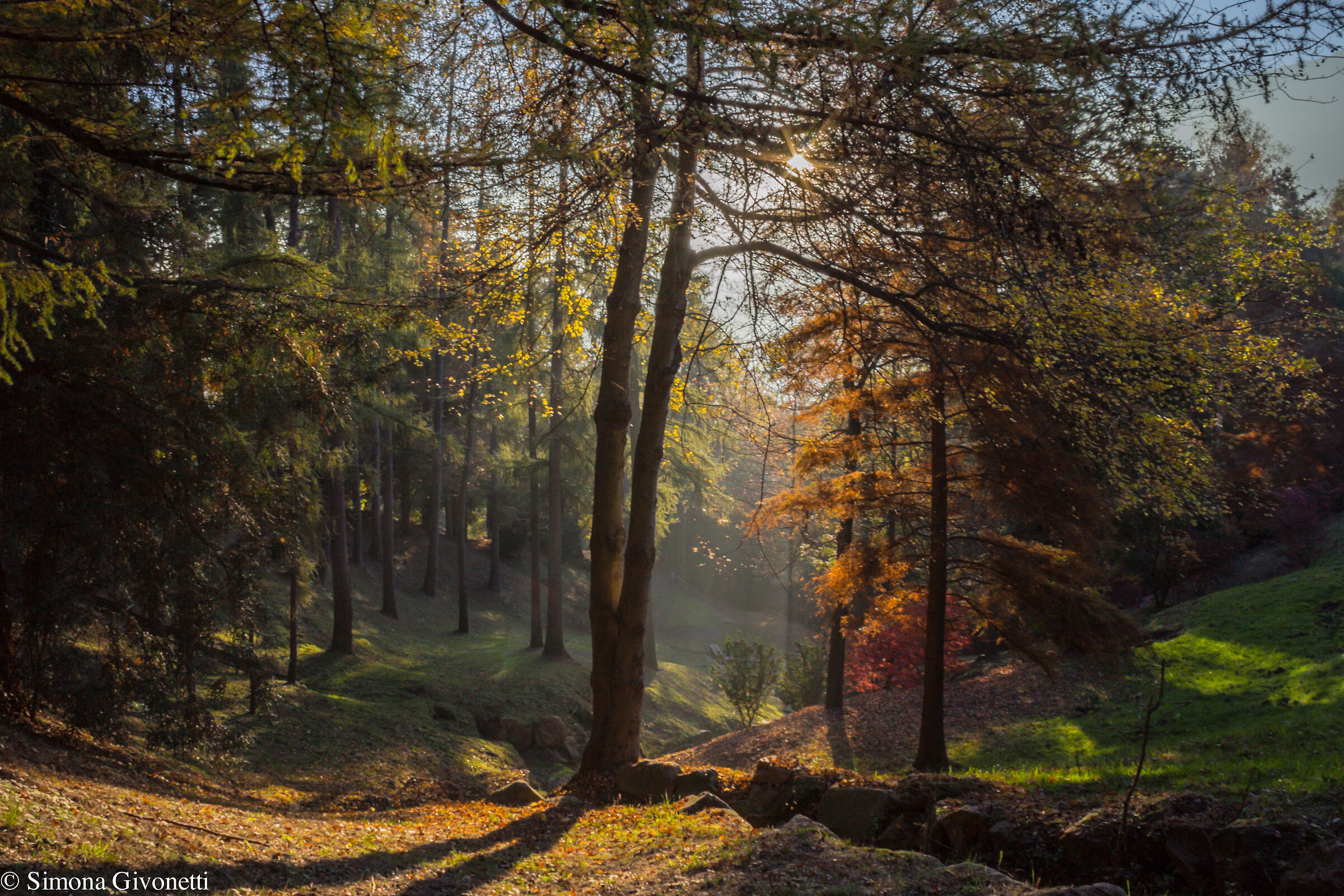 Burcina Park ...