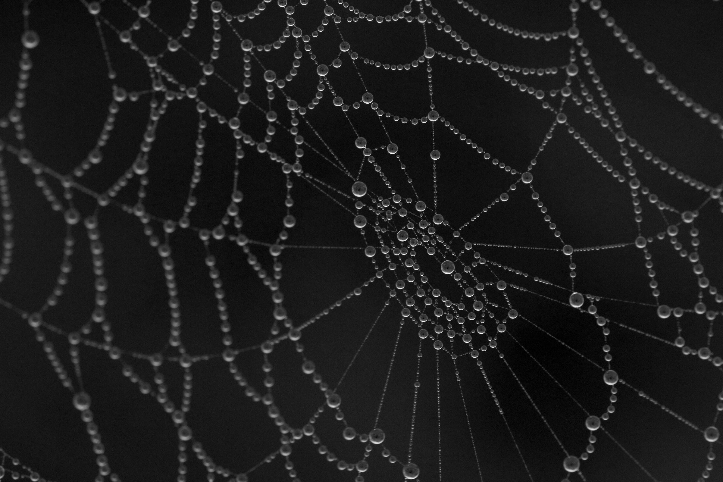 Spider web in the fog...
