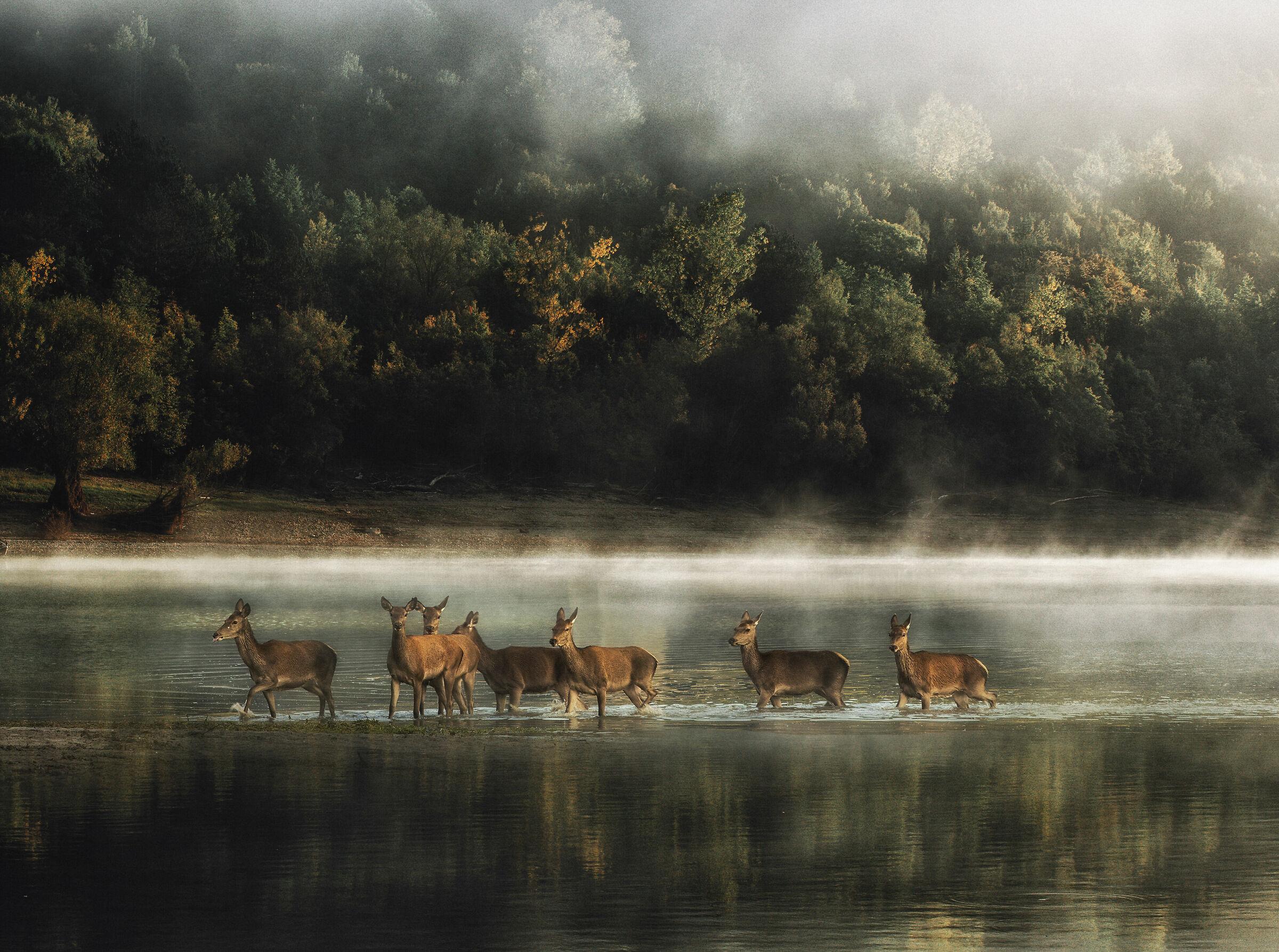 The Painting - Lake Barrea...
