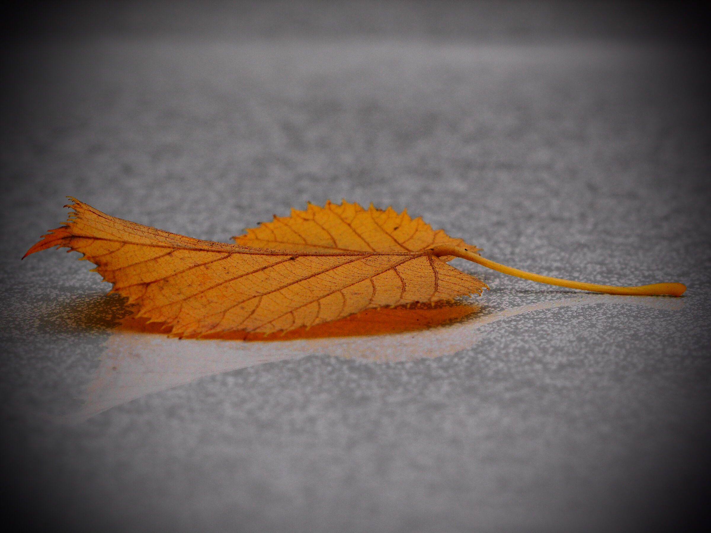 Autumn is here!!...