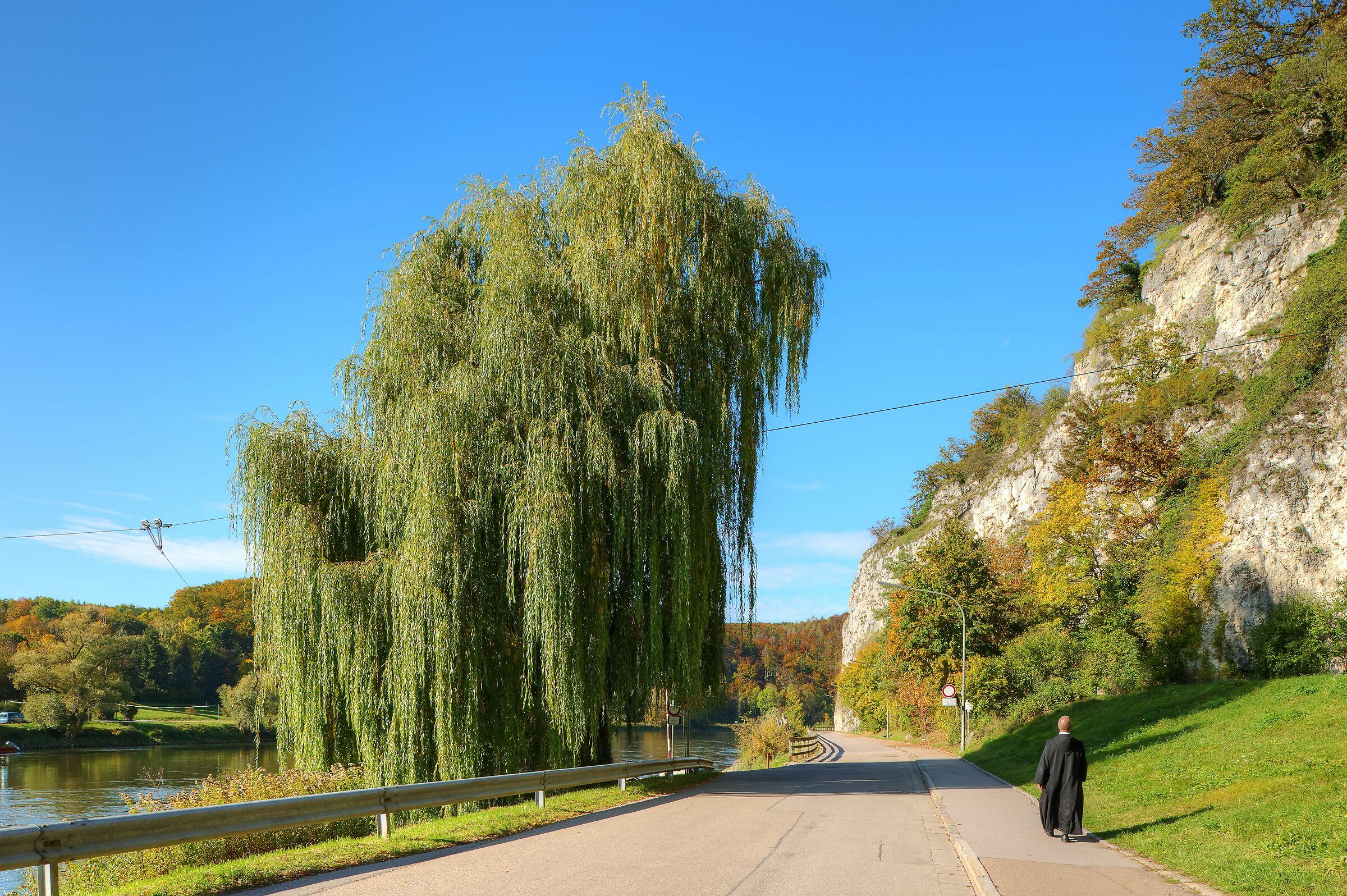 I'm Walking - to Weltenburg Monastery; Germany...