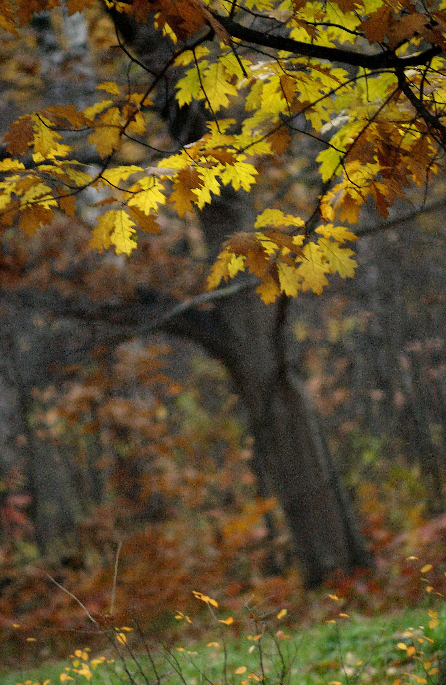 Sinfonia d'autunno...