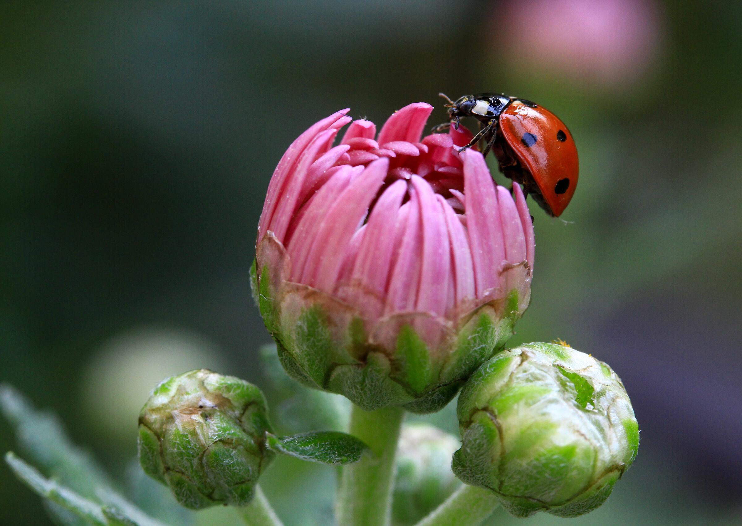 on the bud...