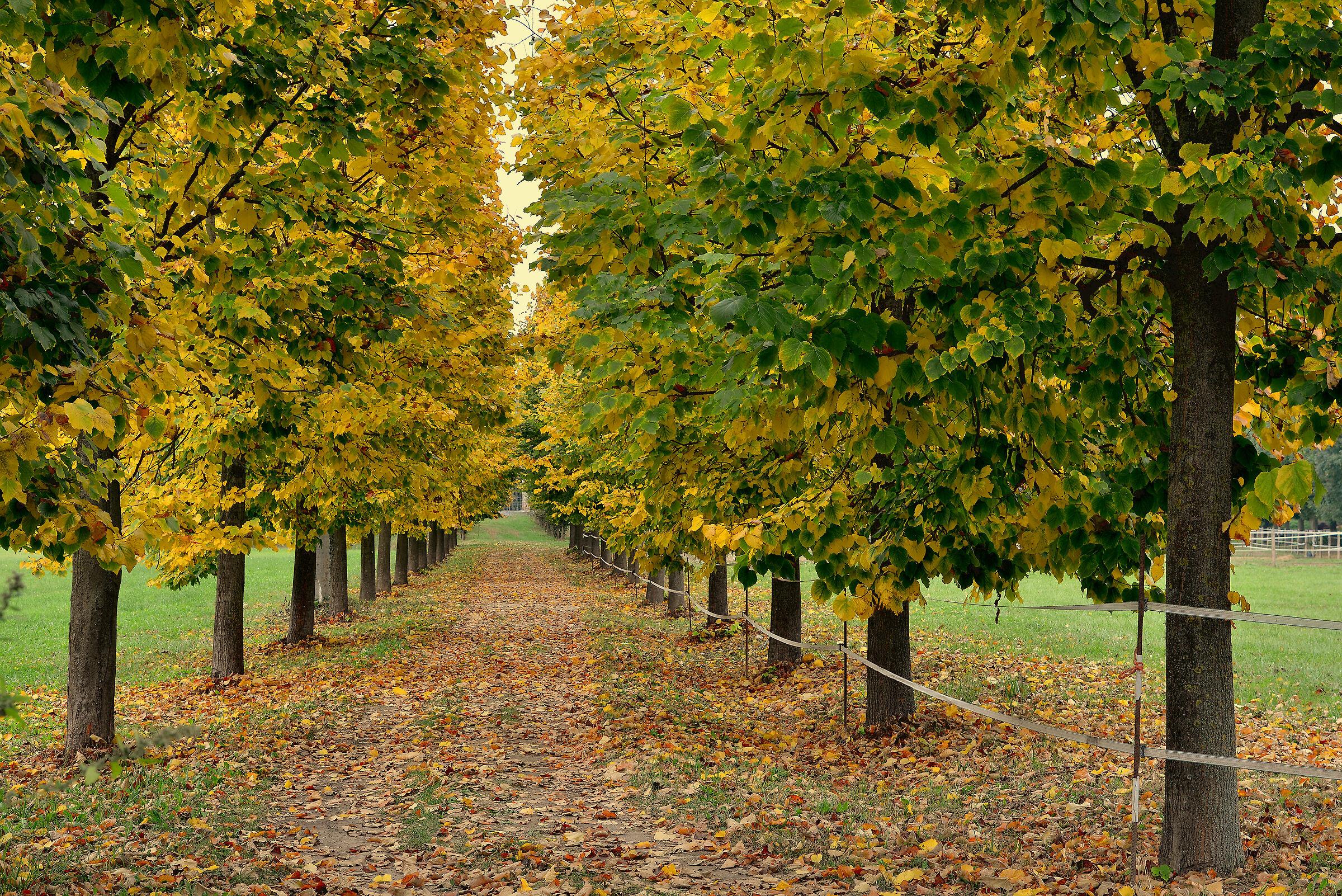 L'autunno alle porte......