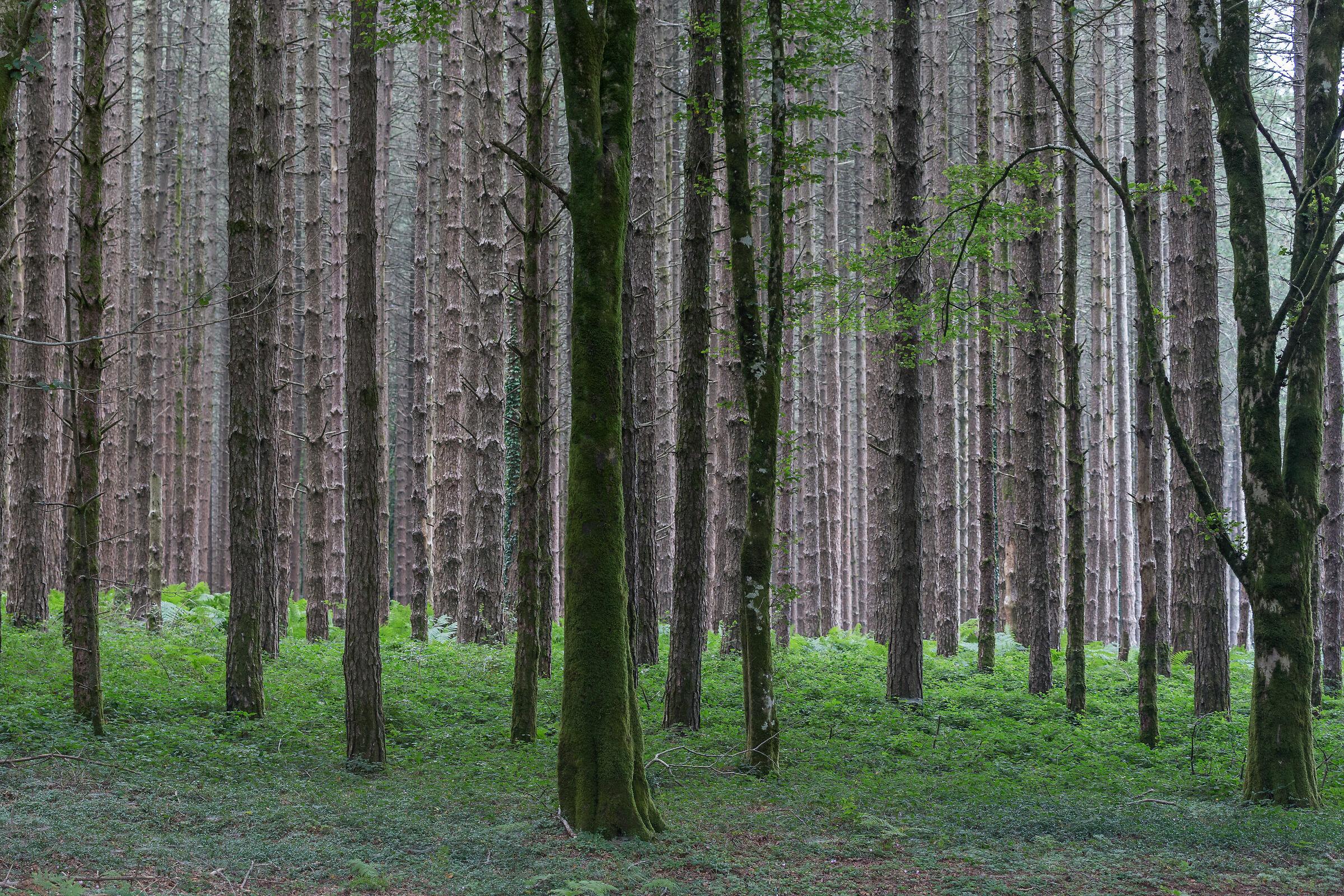 Aspromonte Woods...