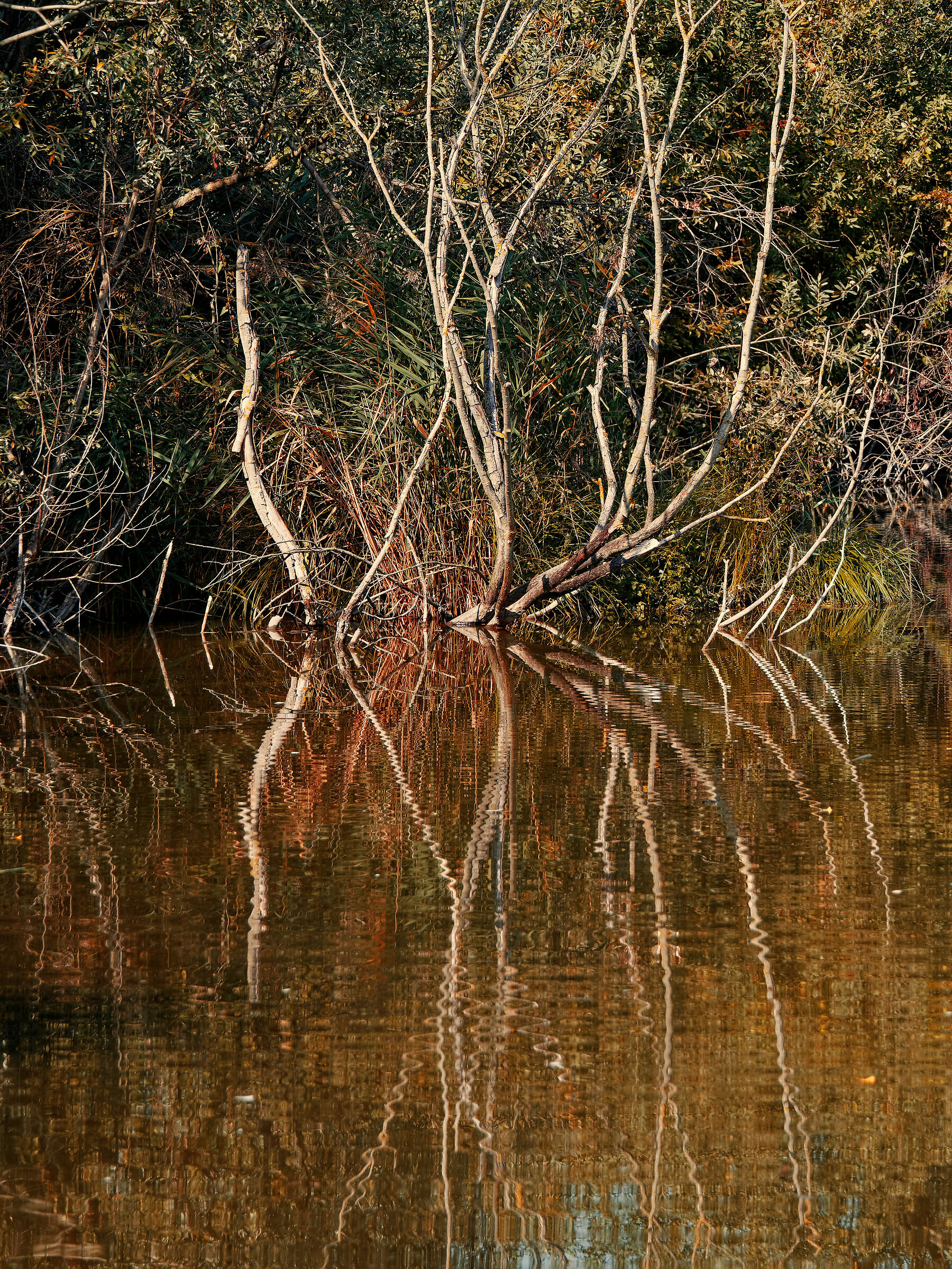 autumn in the swamp...