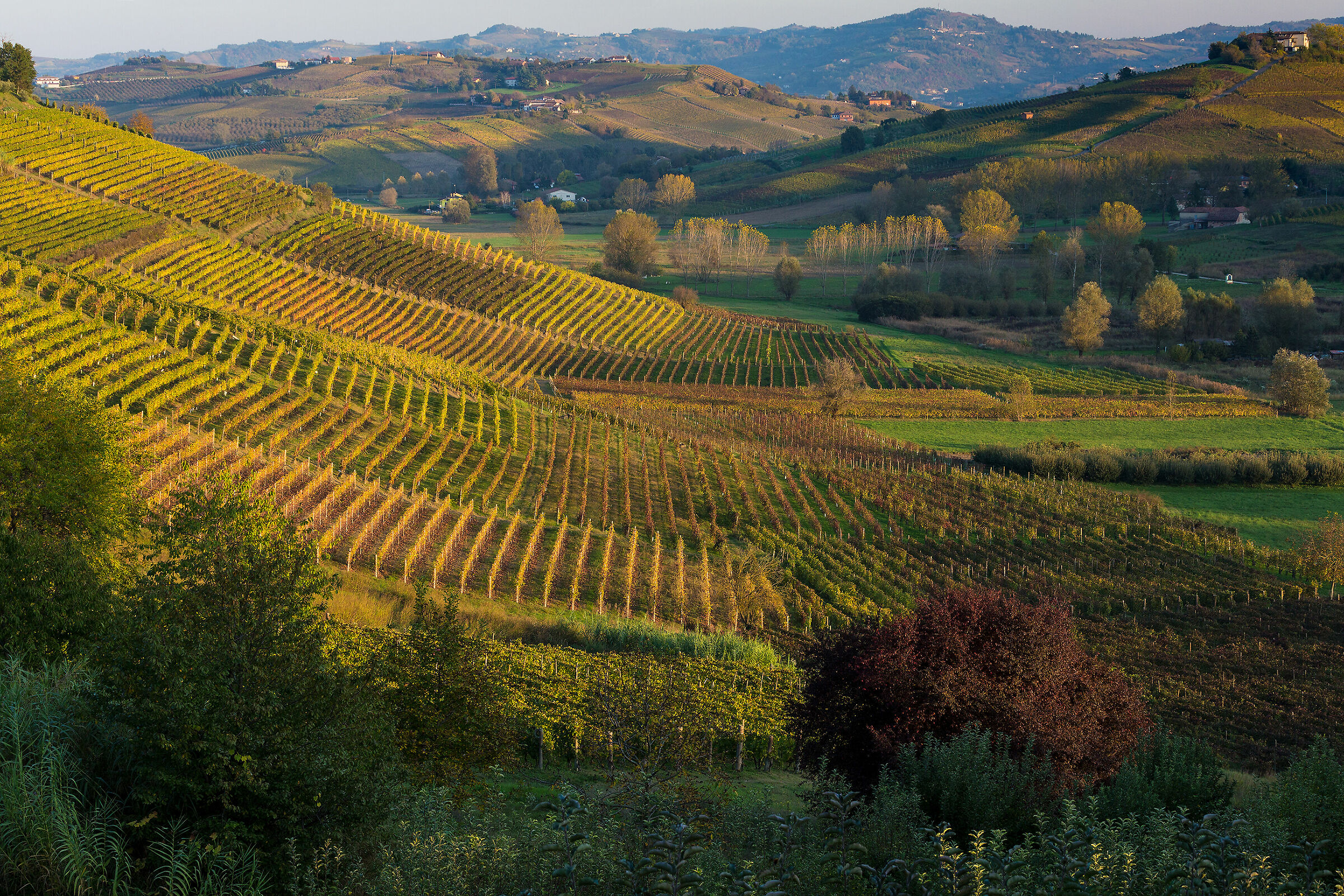 Alto Monferrato Astigiano...