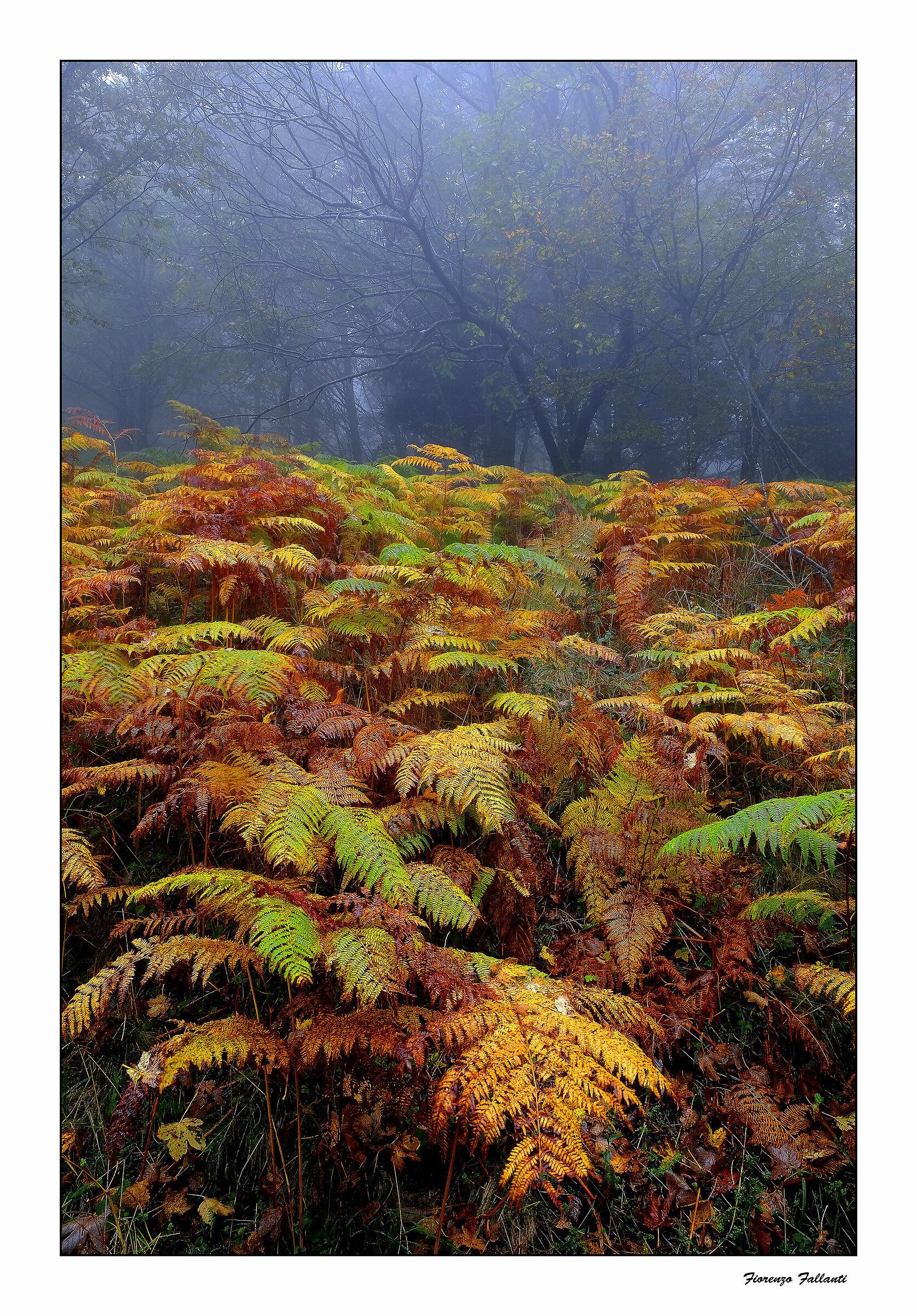 Autumn in the rain......