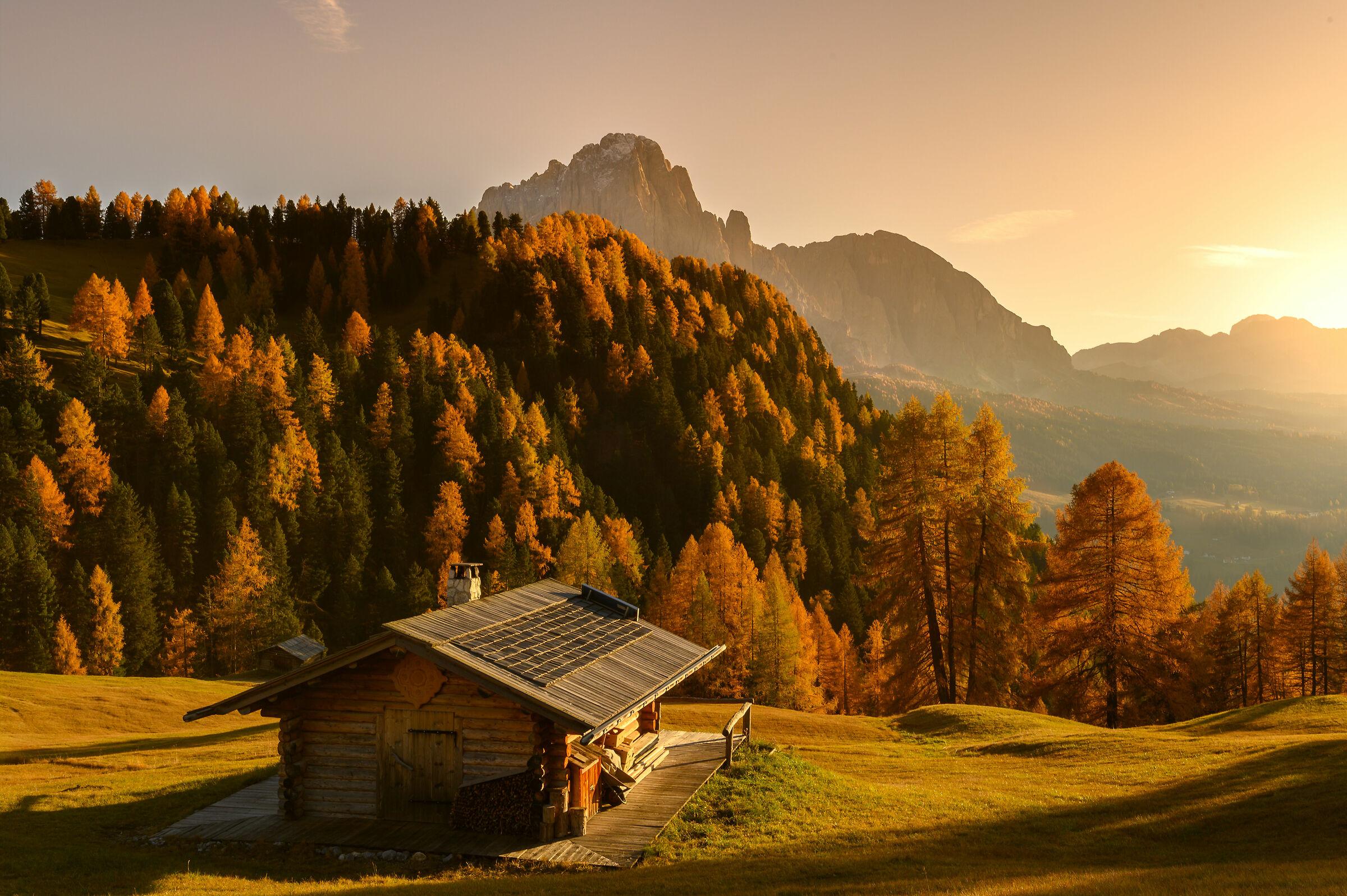Autumn in the light...