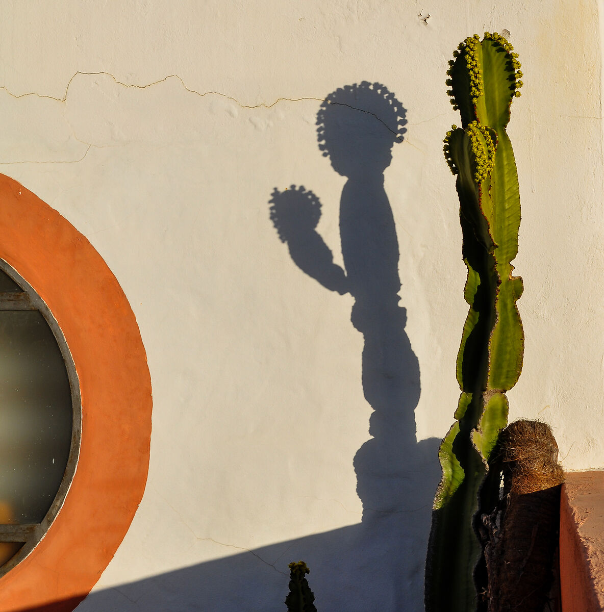 in the shade of the cactus...