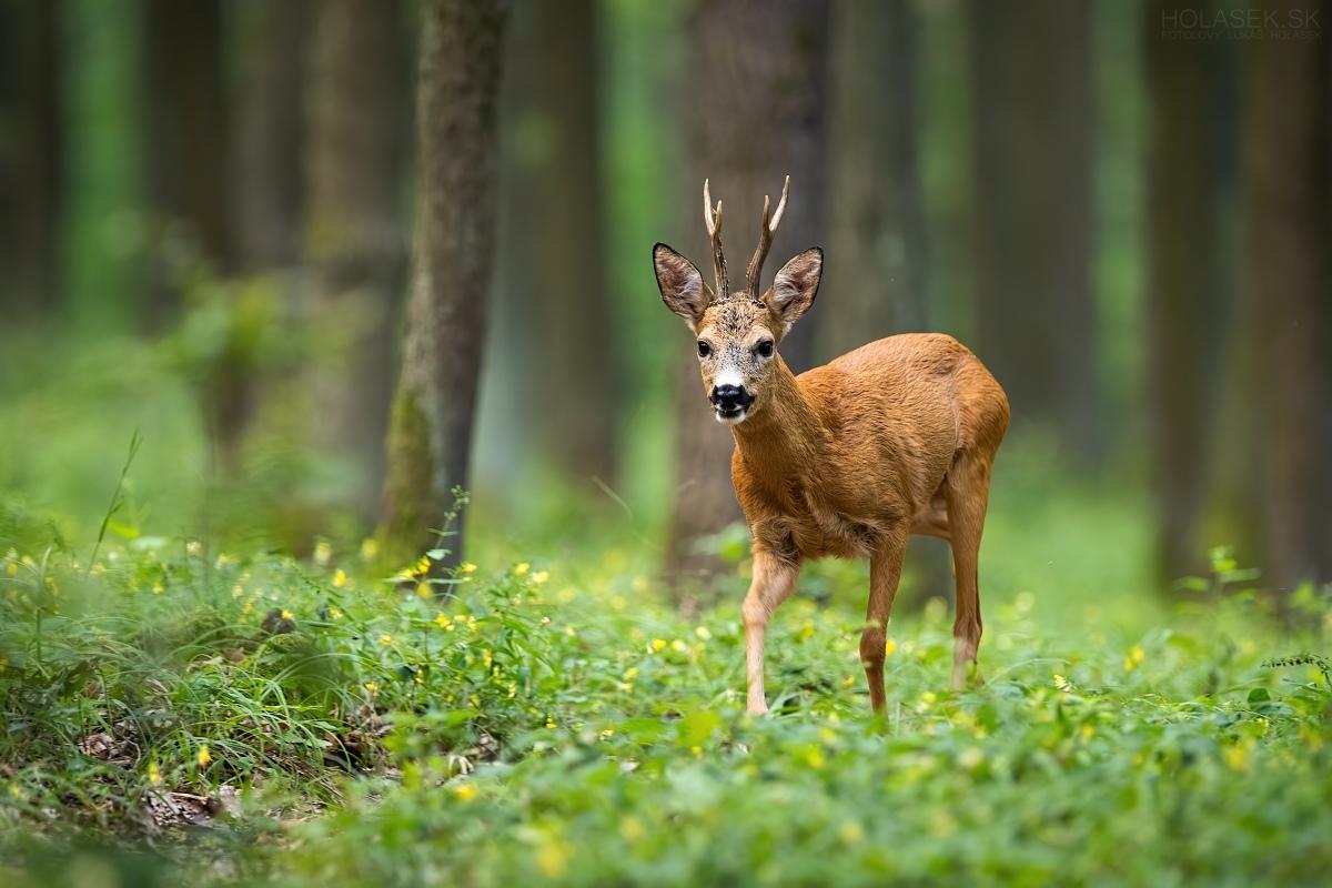 Oak forest...