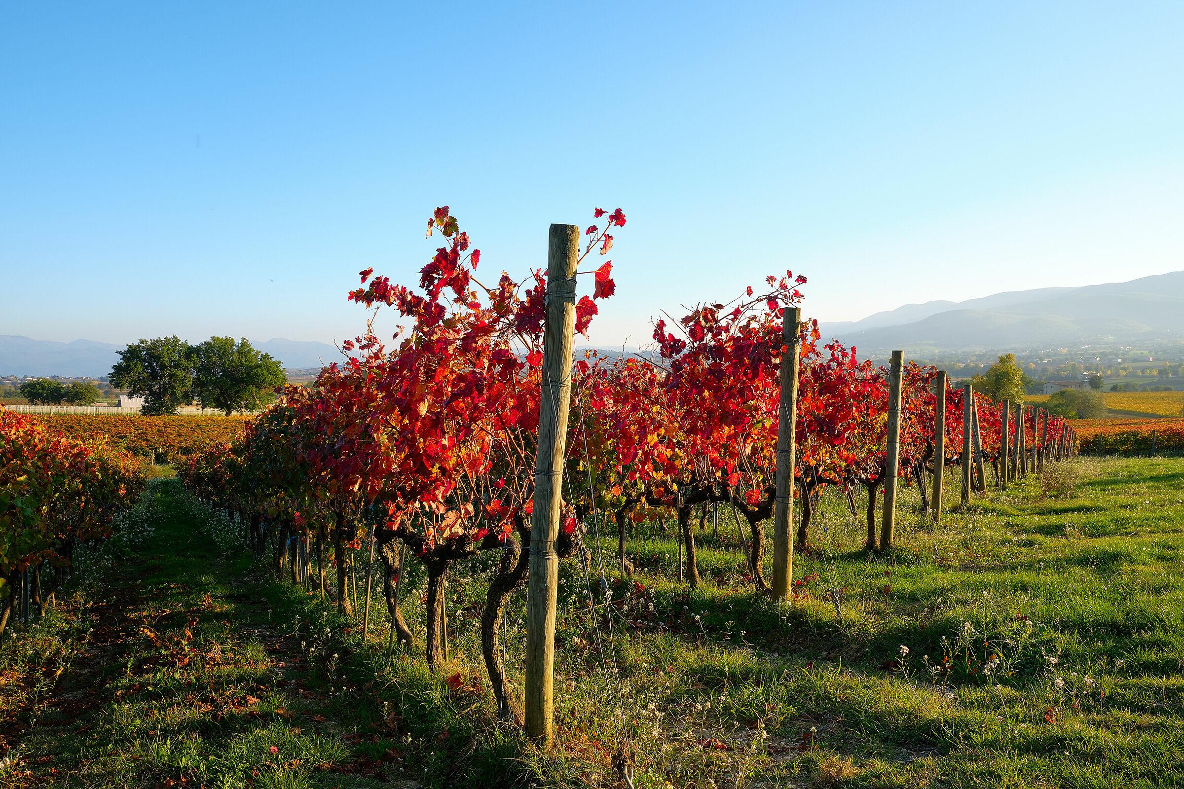 Foliage alla cantina Perticaia...