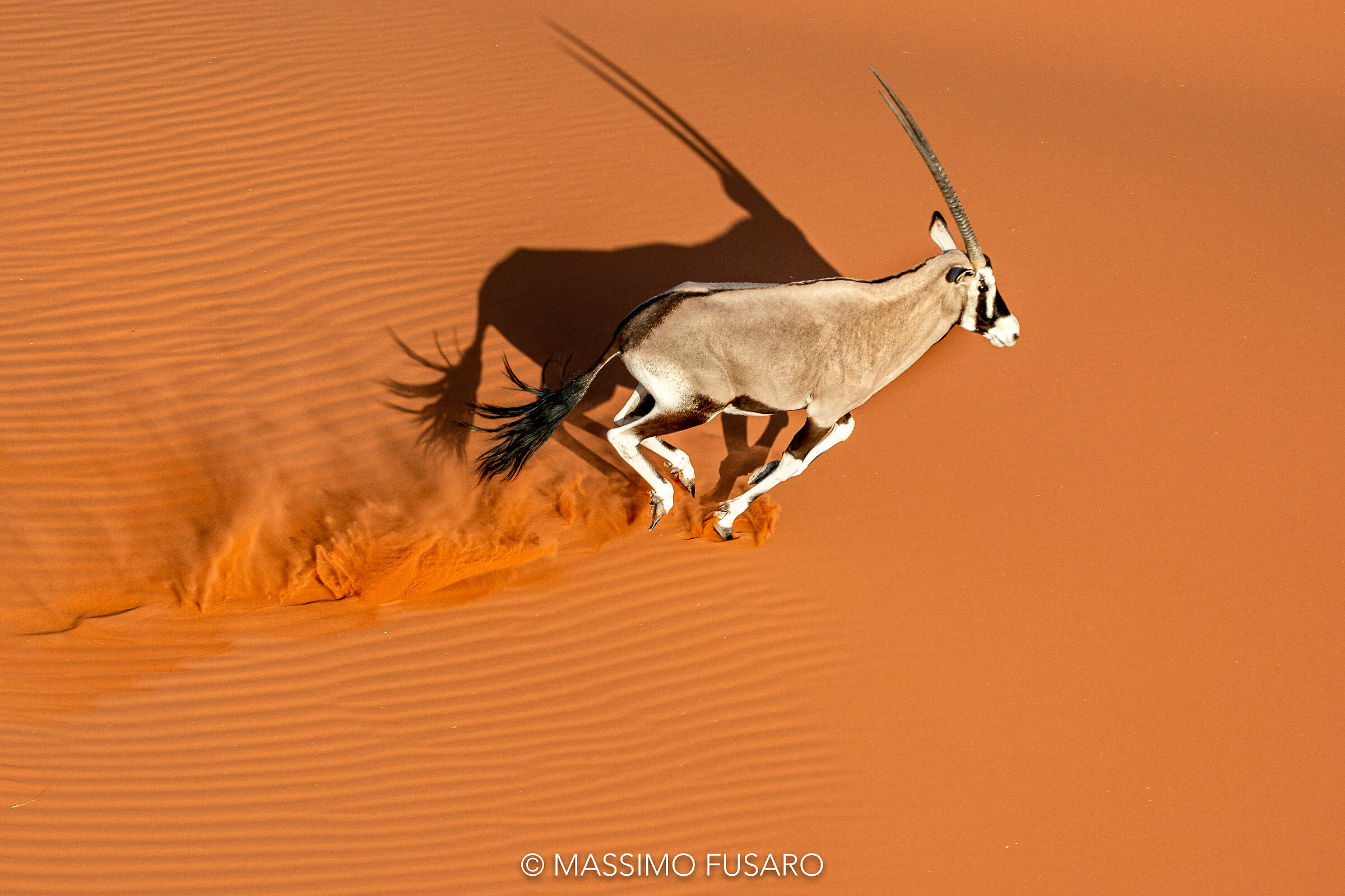 Oryx in the desert...