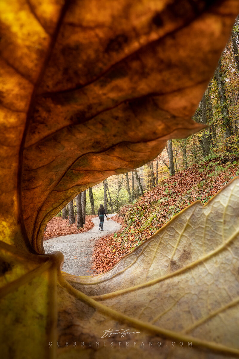 Foliage, New...