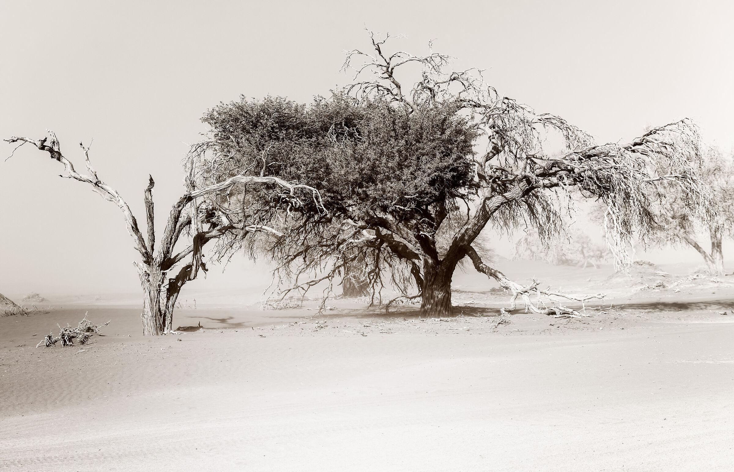 Tempesta di sabbia sul Namib...