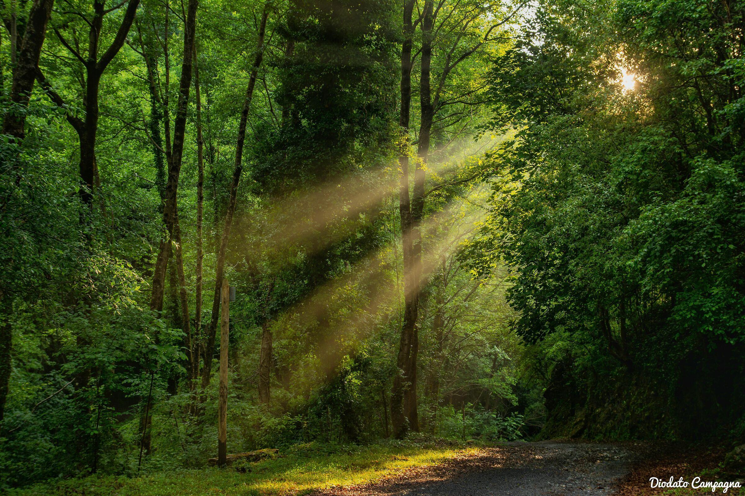 Sunbeams make their way through the trees...