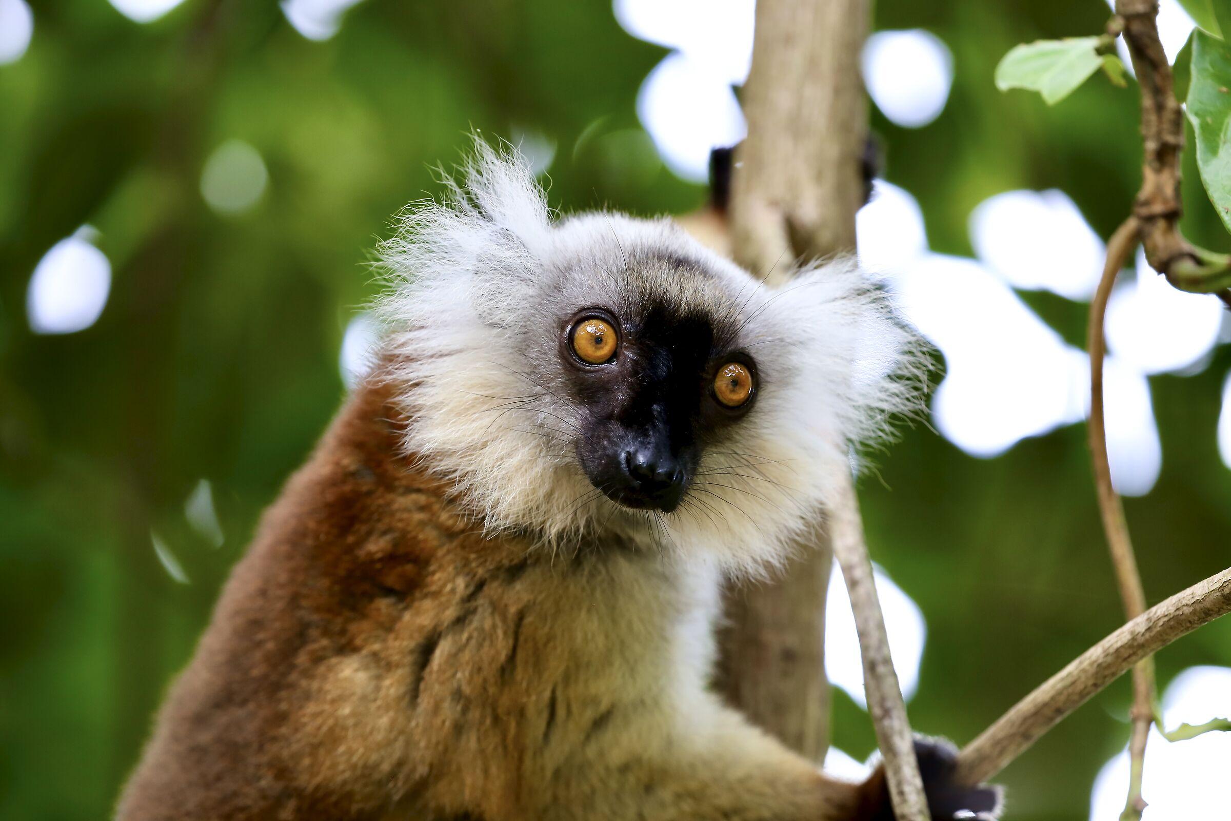 Madagascar...