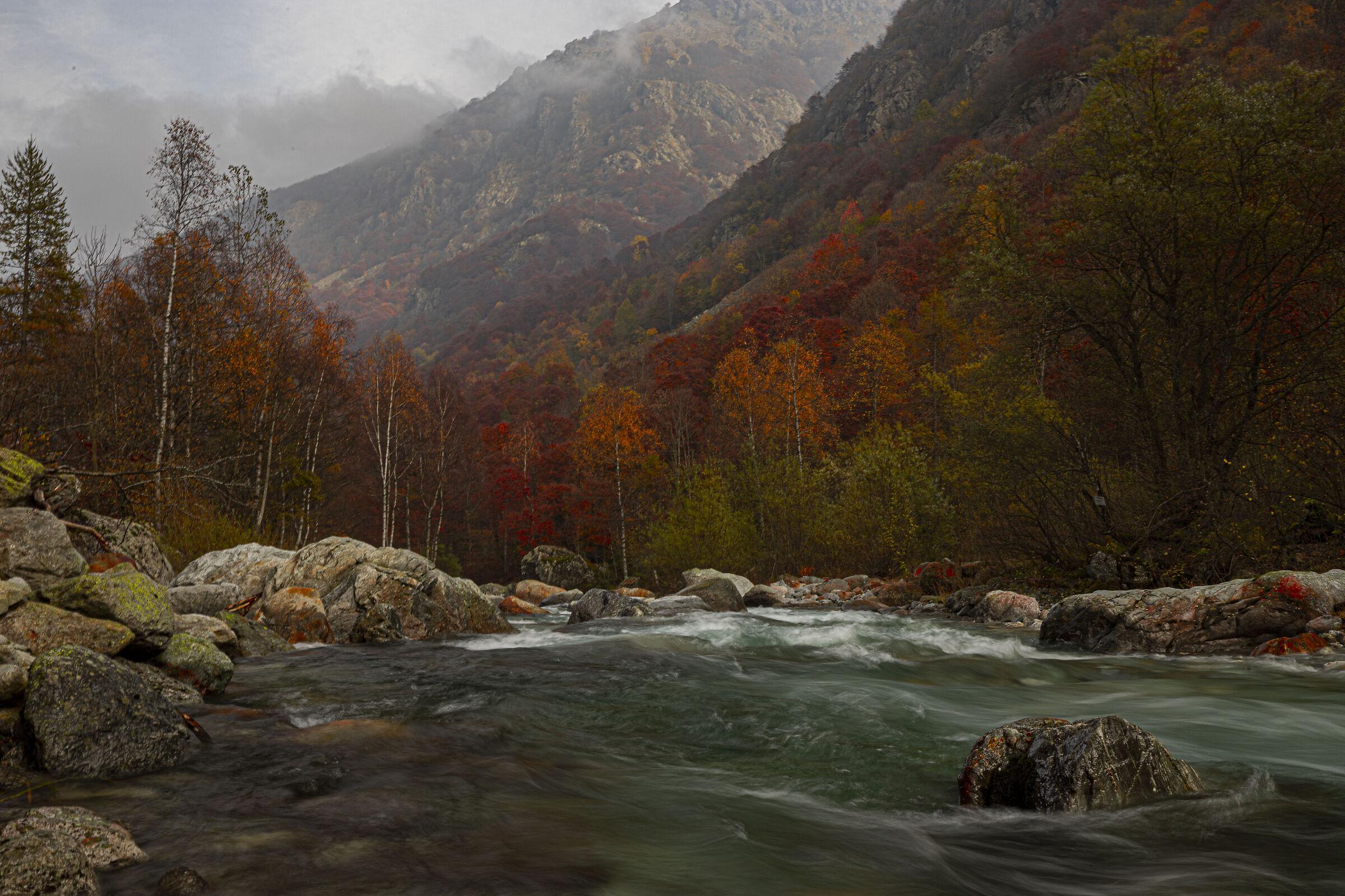I colori dell'autunno......