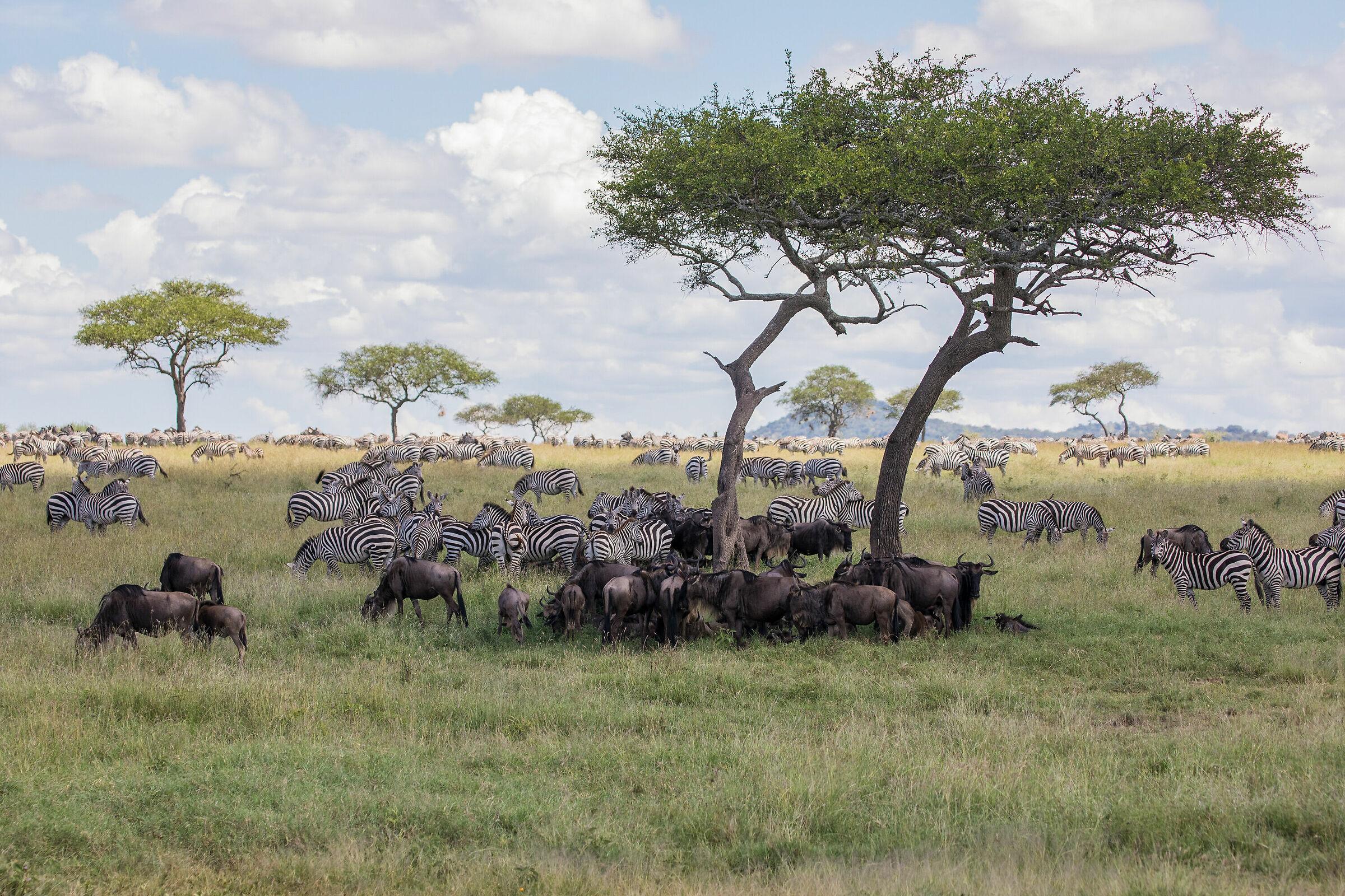 My Africa ...