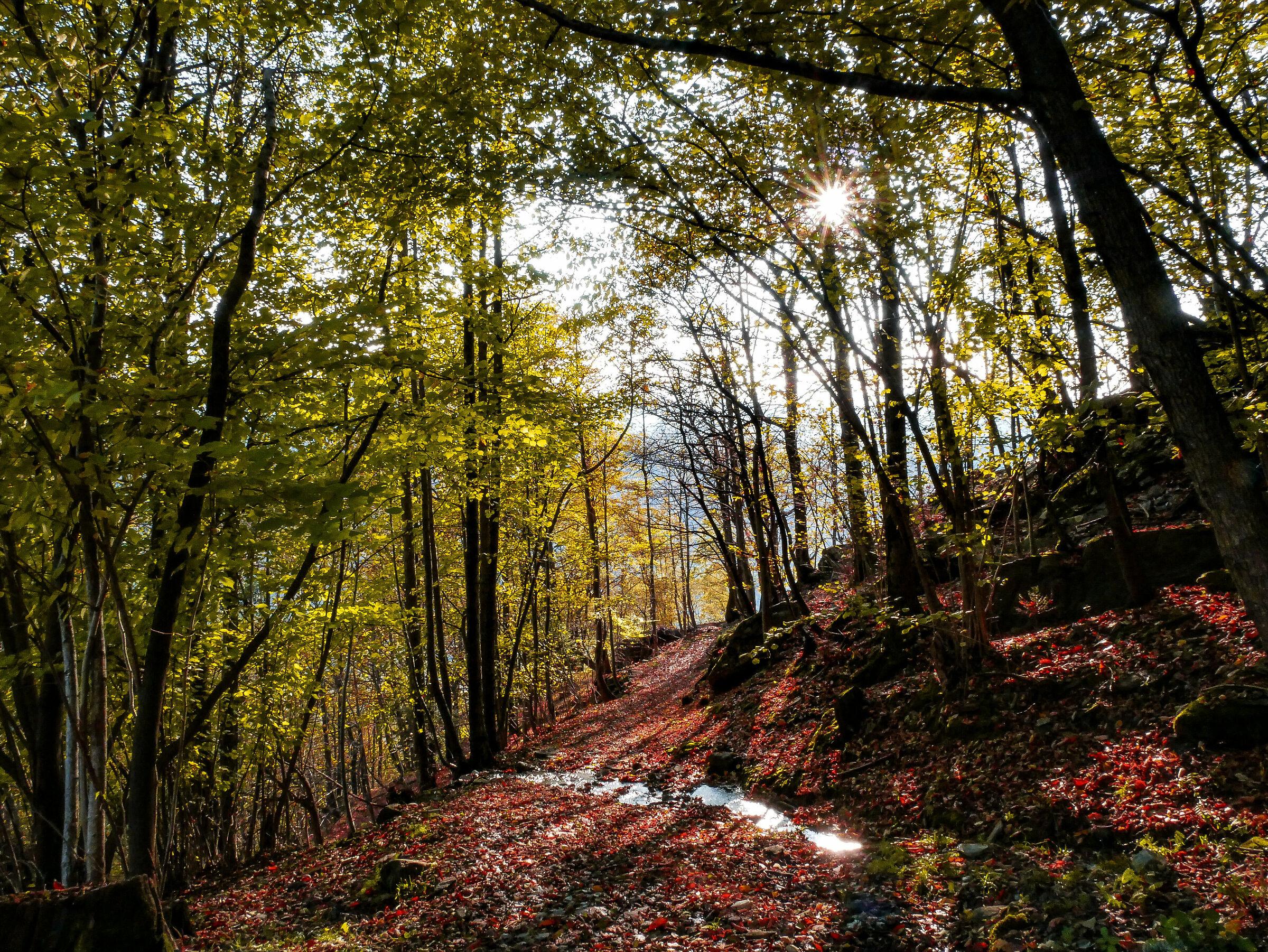 Down to the autumn...
