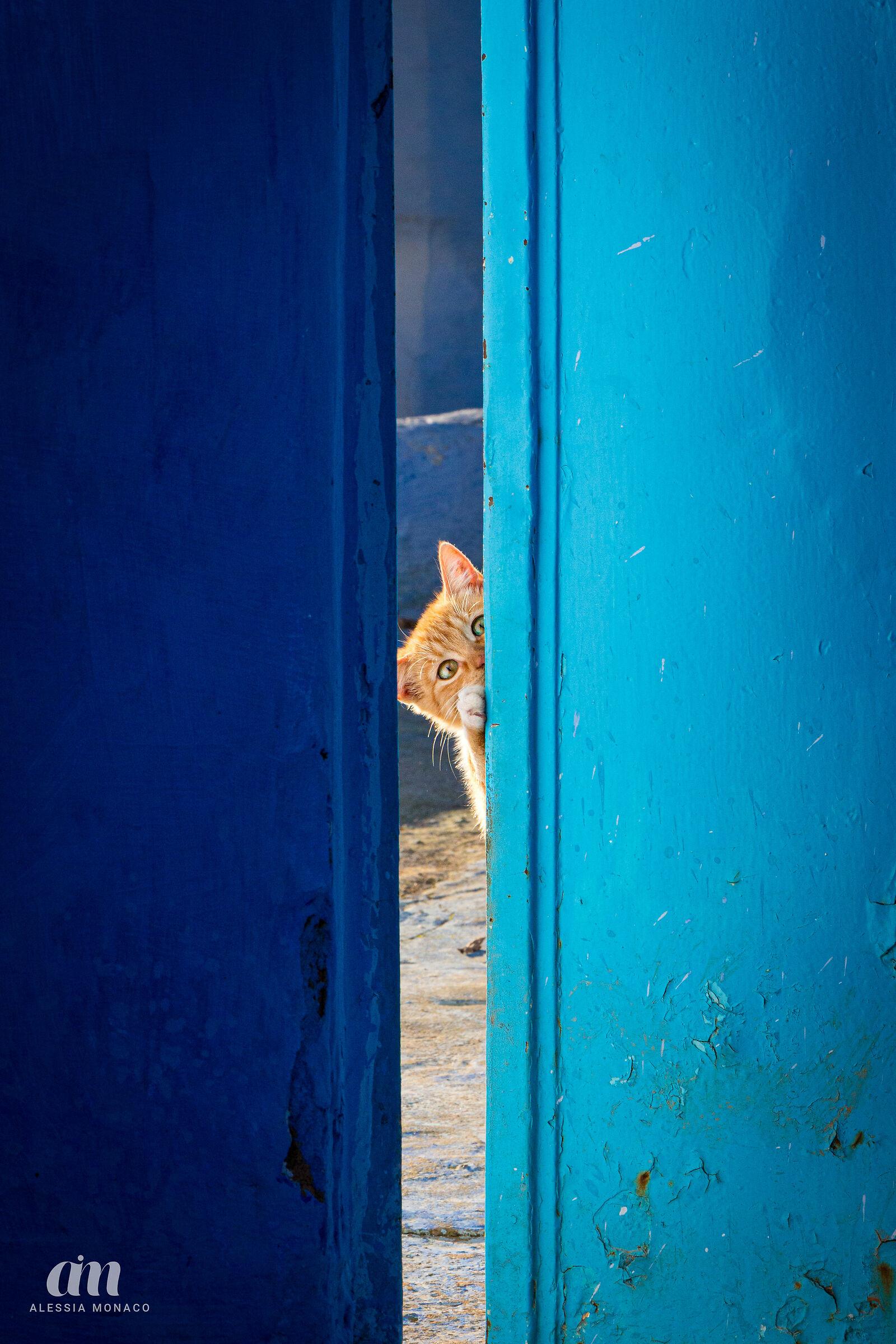 Gatti curiosi a Chefchaouen...