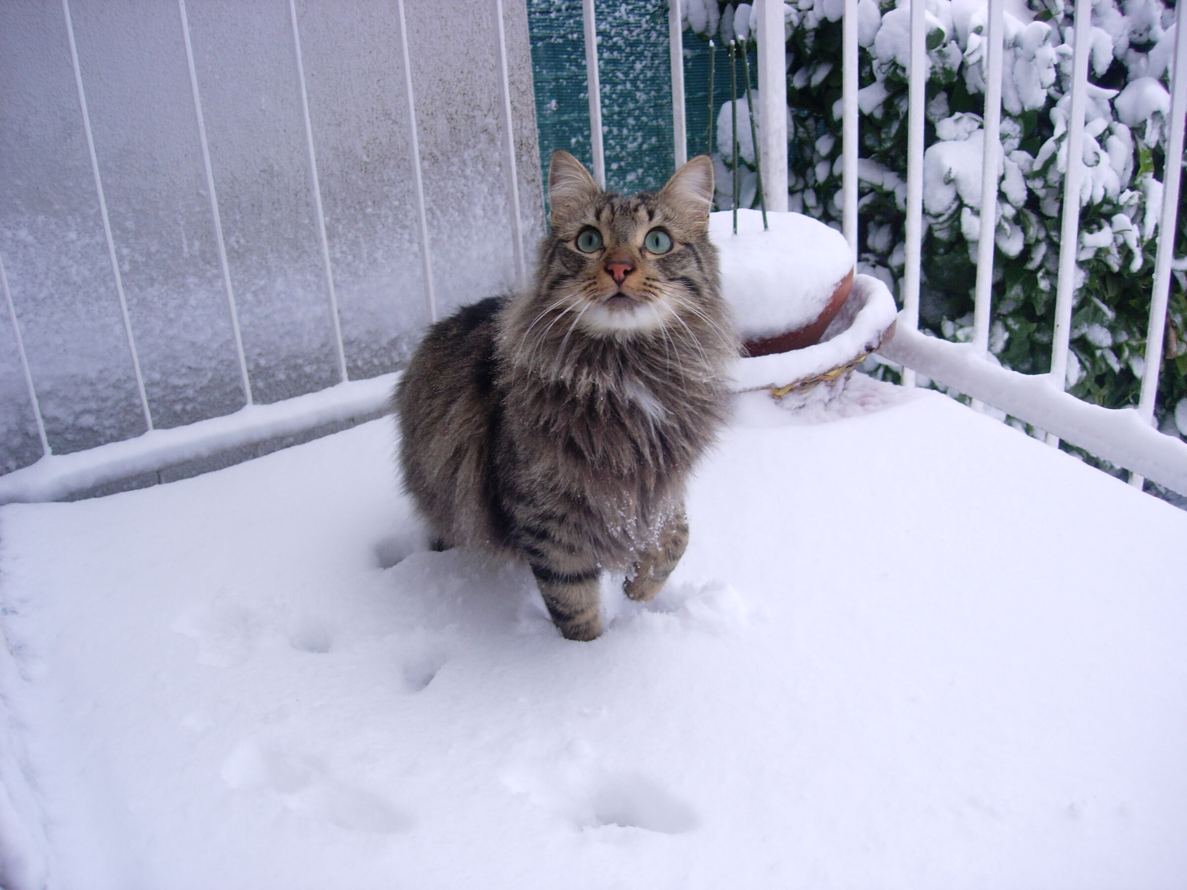 The Snowcat...