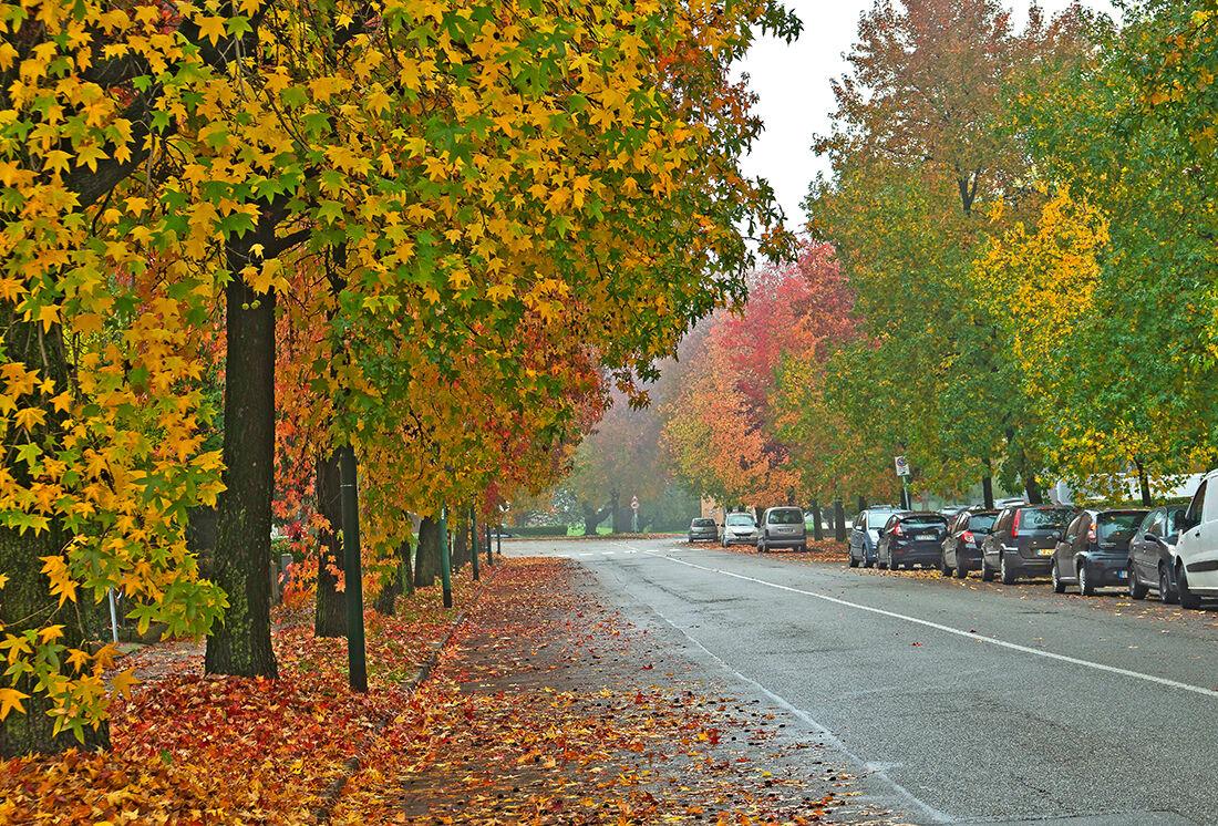 Cremona in autumn...