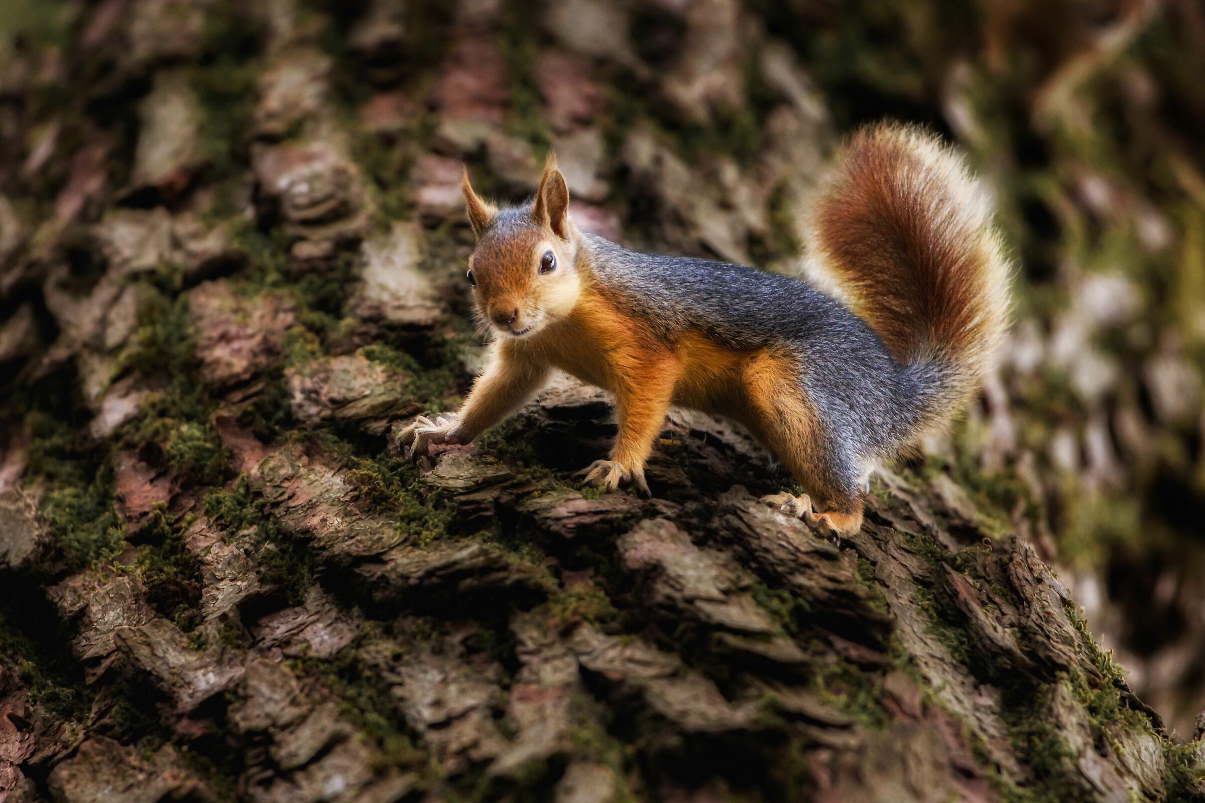 First squirrel...