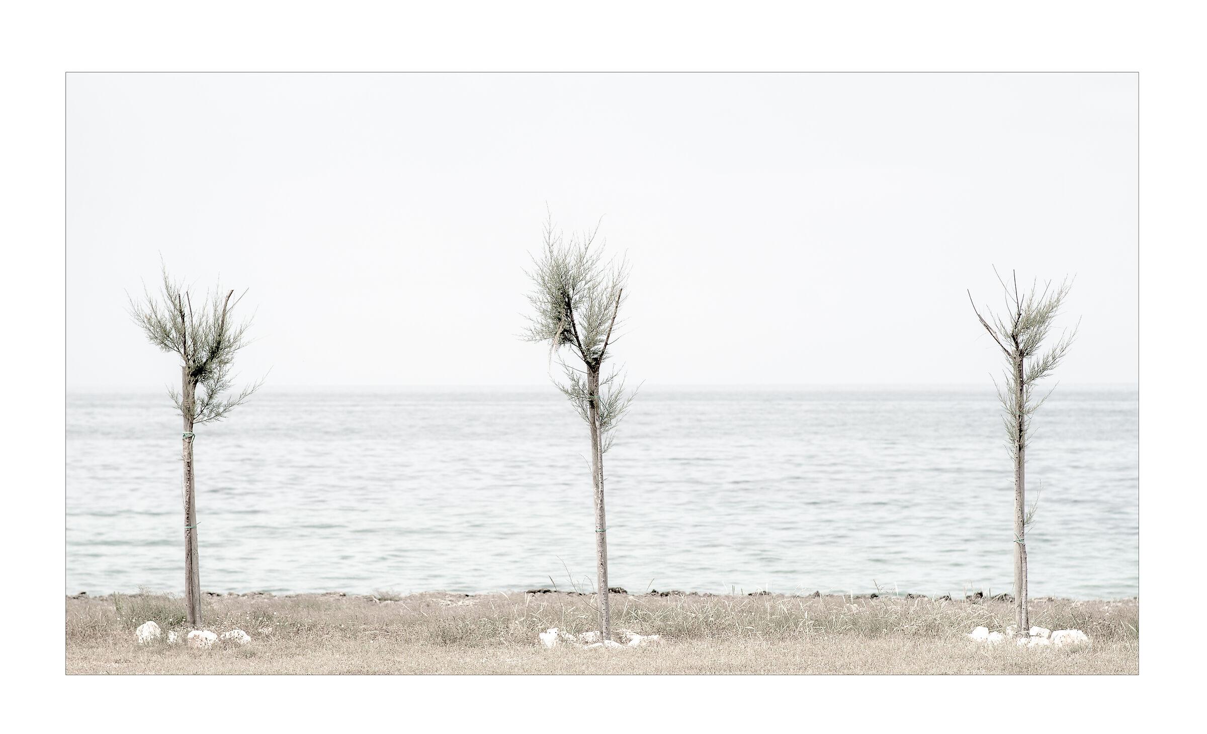 Three Free Trees...