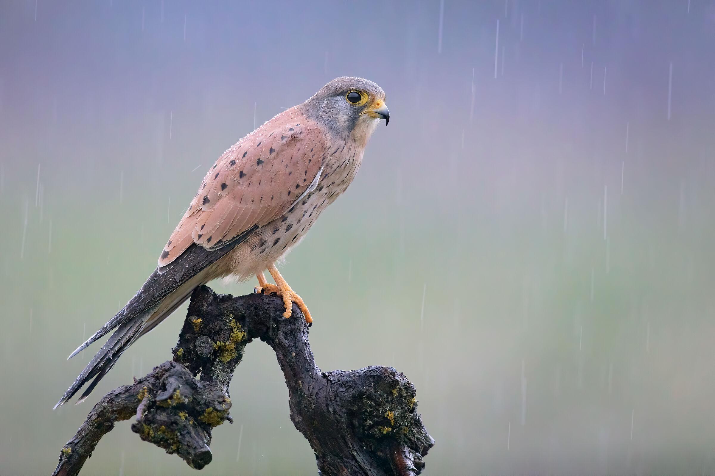 Killer Rain...