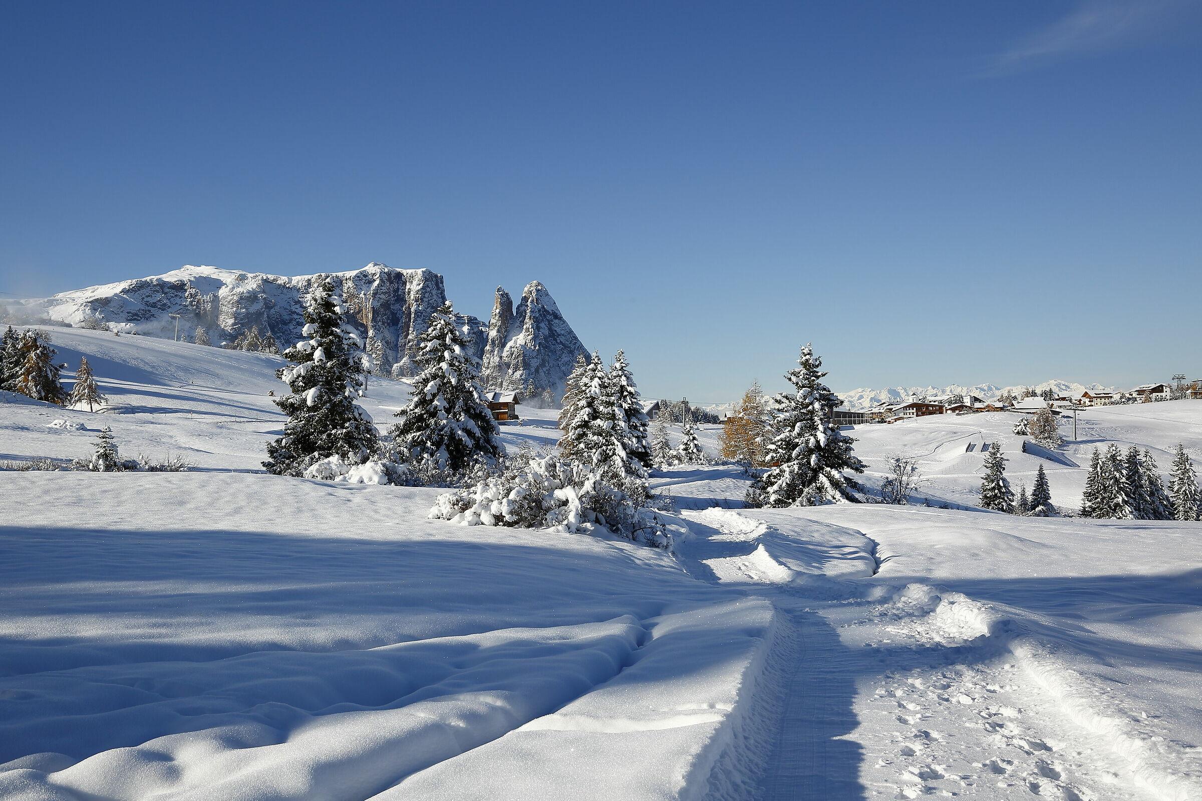 The Sciliar seen from the Alpe di Siusi ...