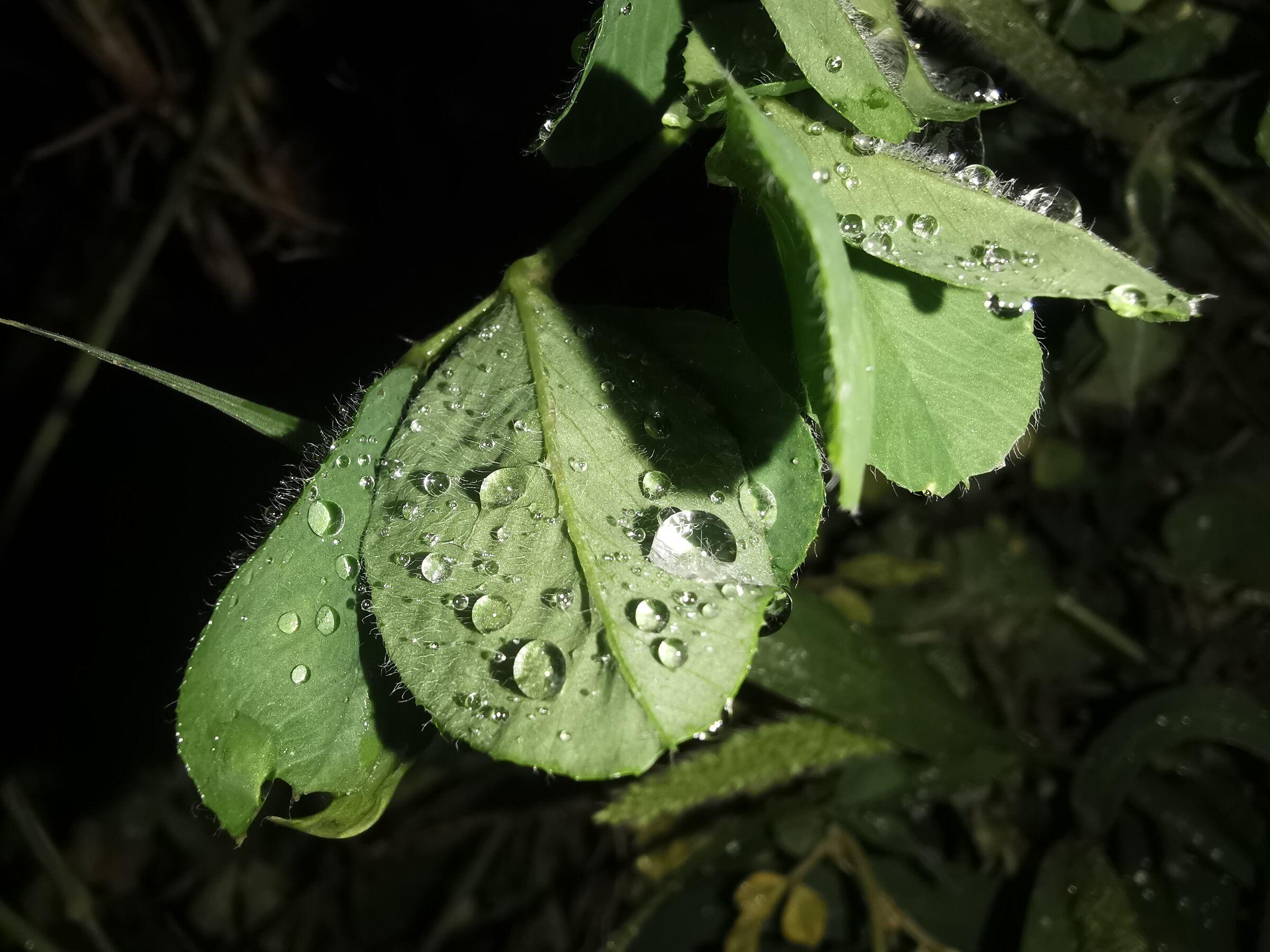 nigh rainy macro leaves...