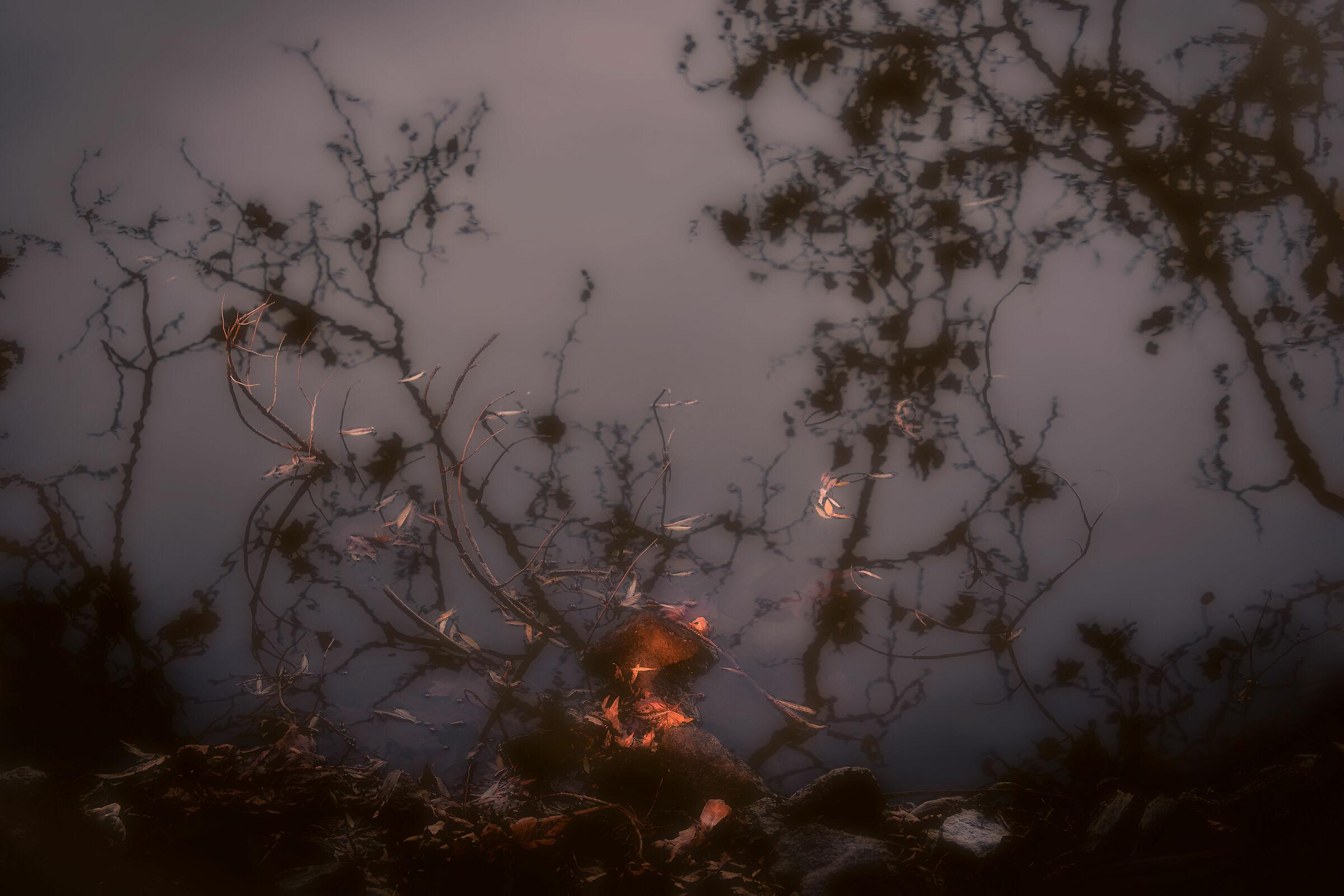 My Autumn...