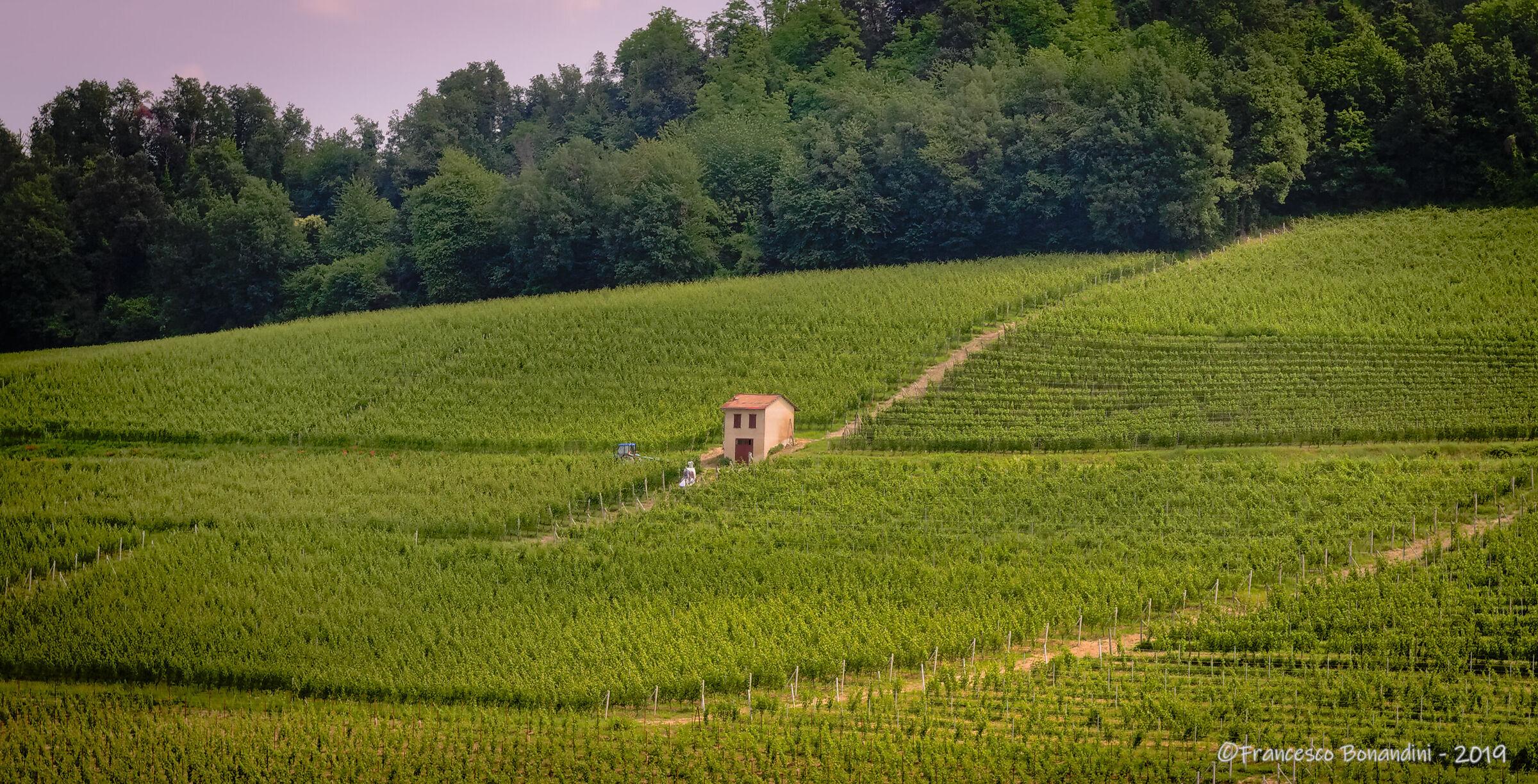 The Vineyard Cottage...