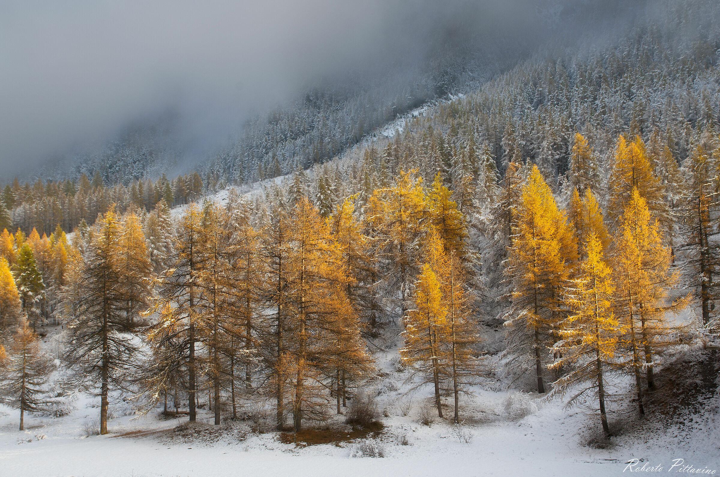 When winter embraces autumn...