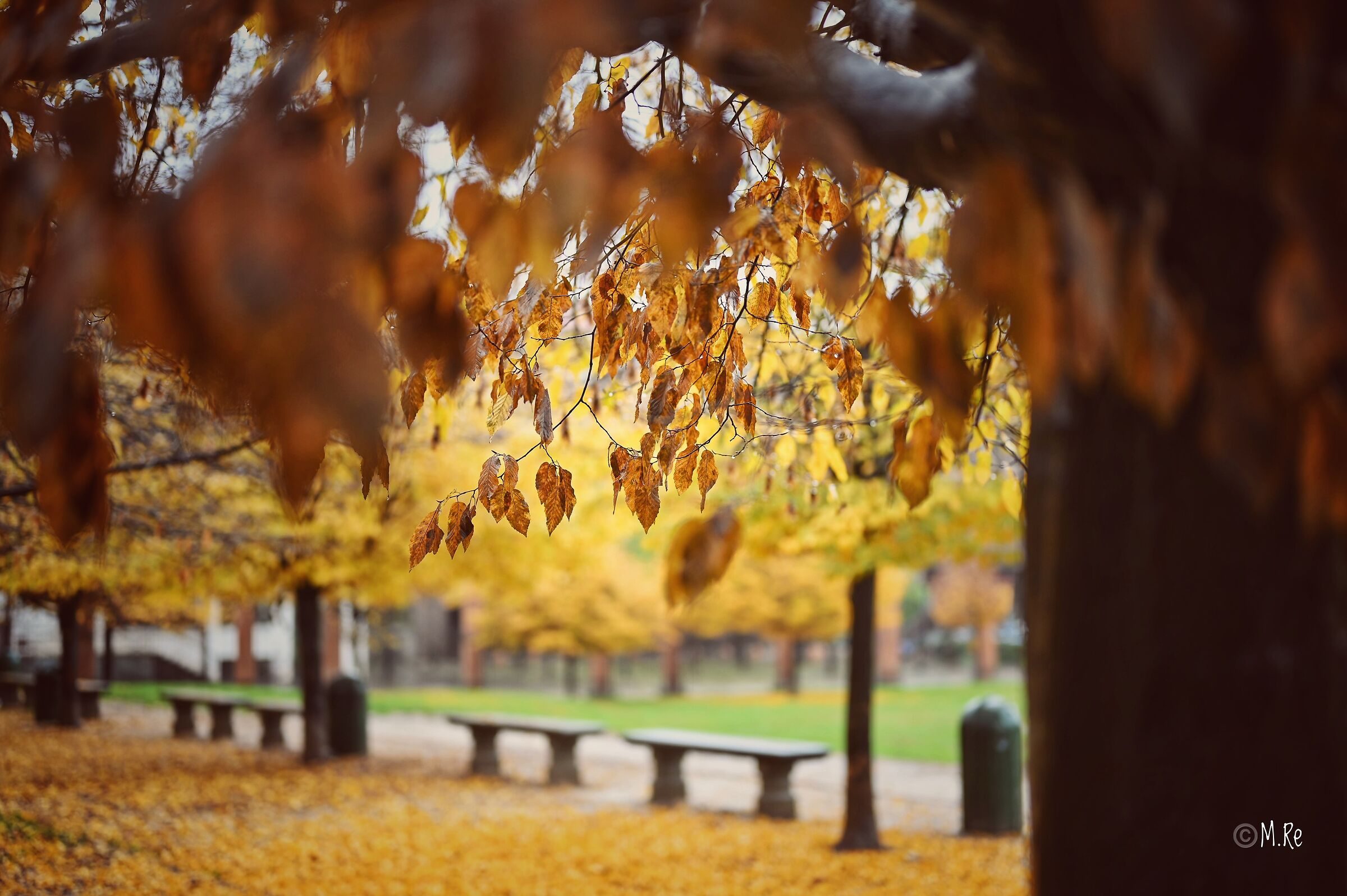 Park in autumn...