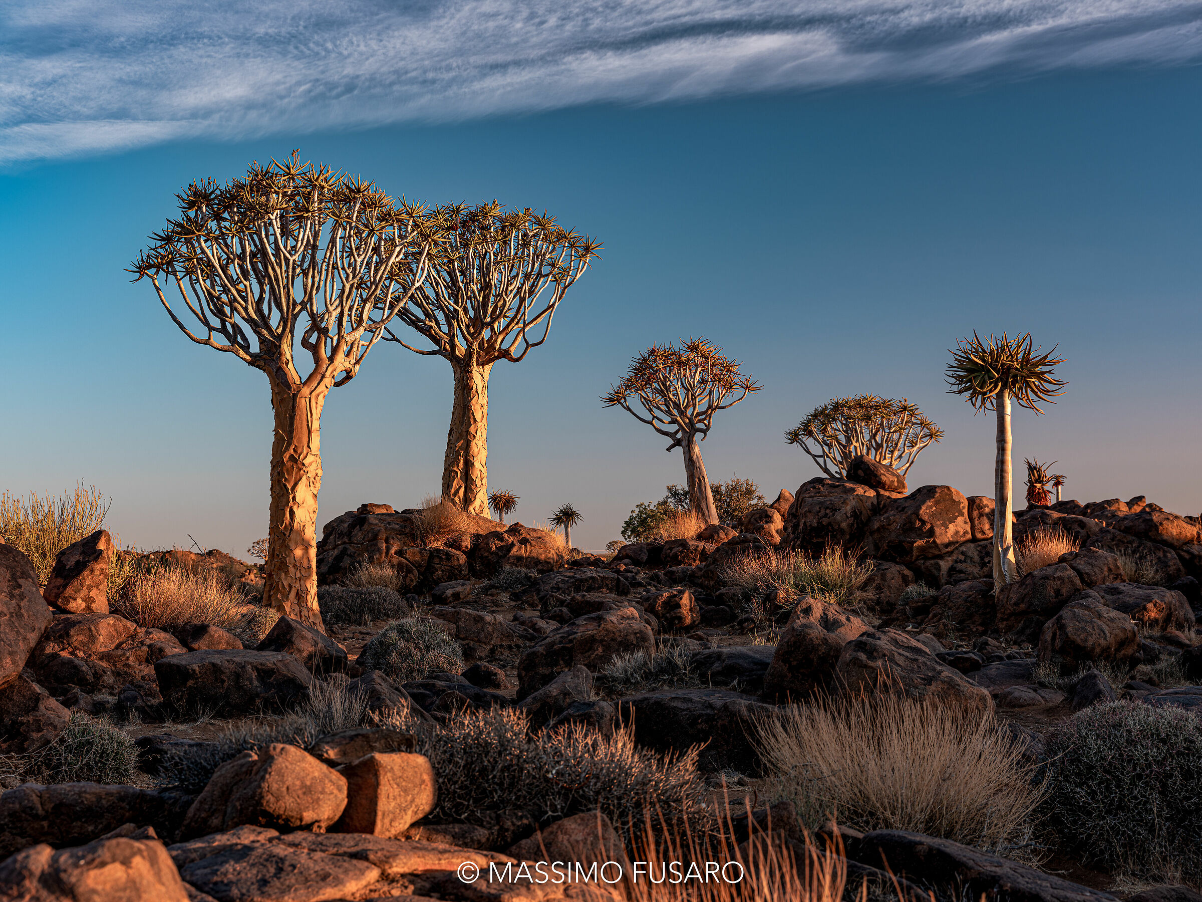 Quiver tree forest...