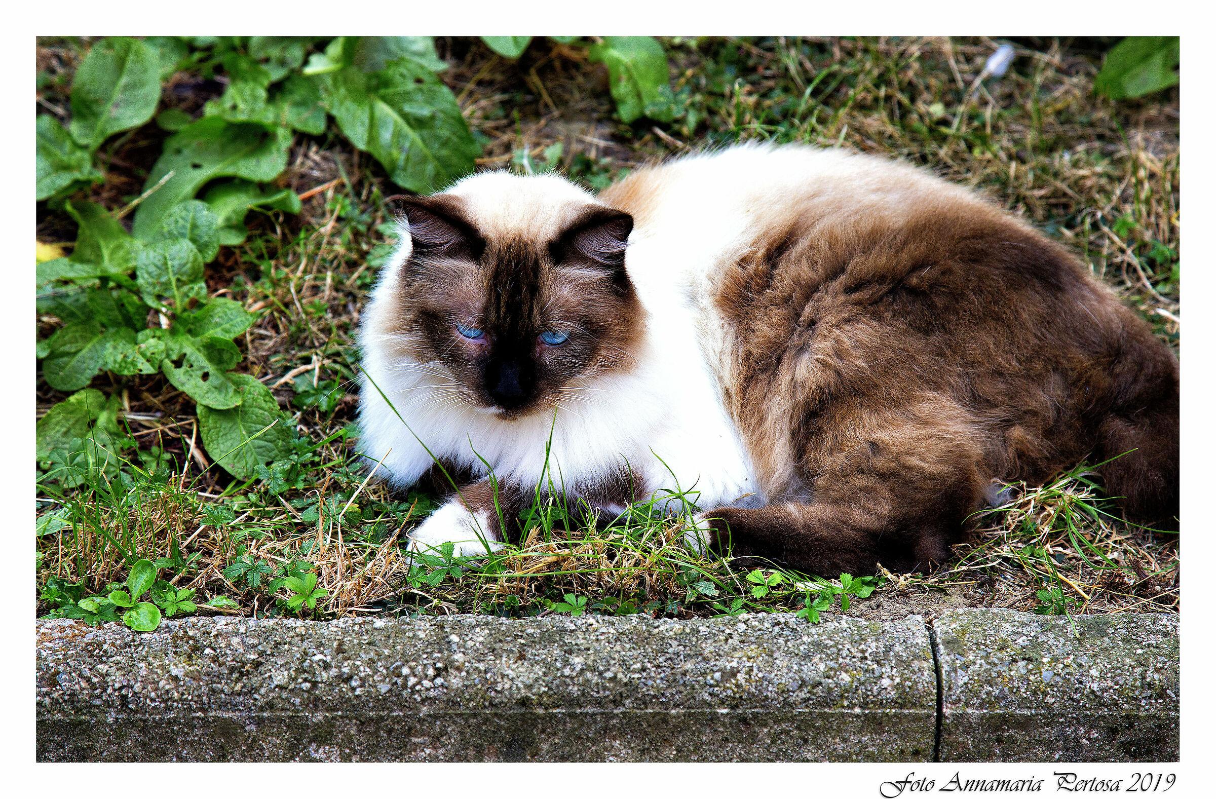 Hector, my neighbor's cat...