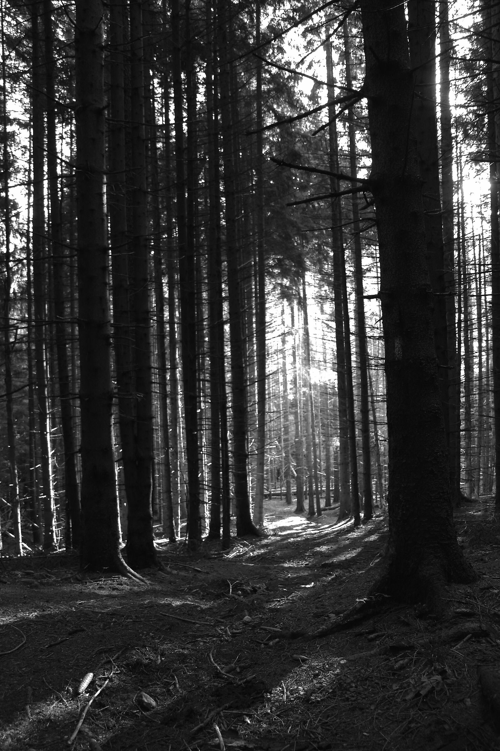 Inside the woods....