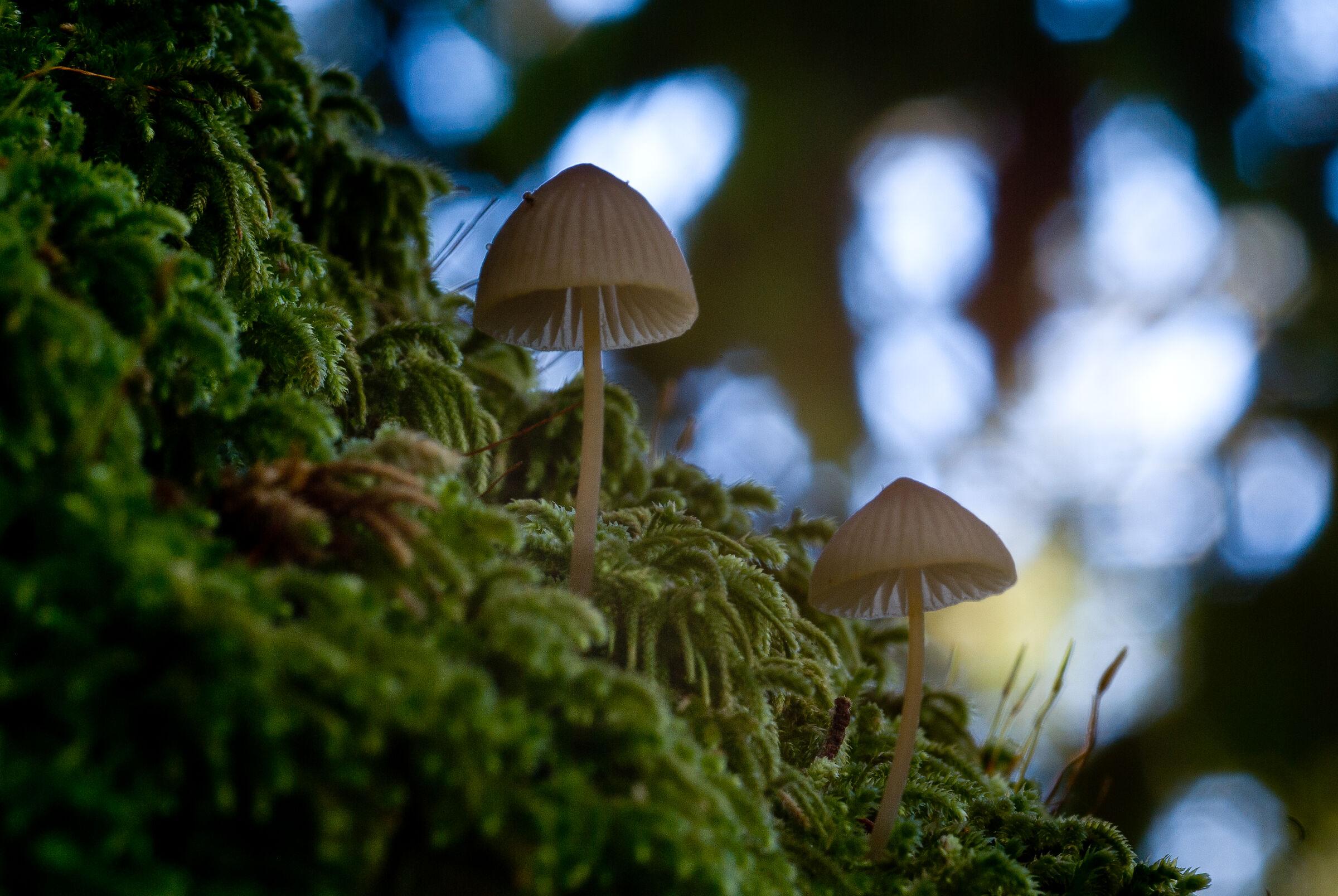 Little mushrooms...