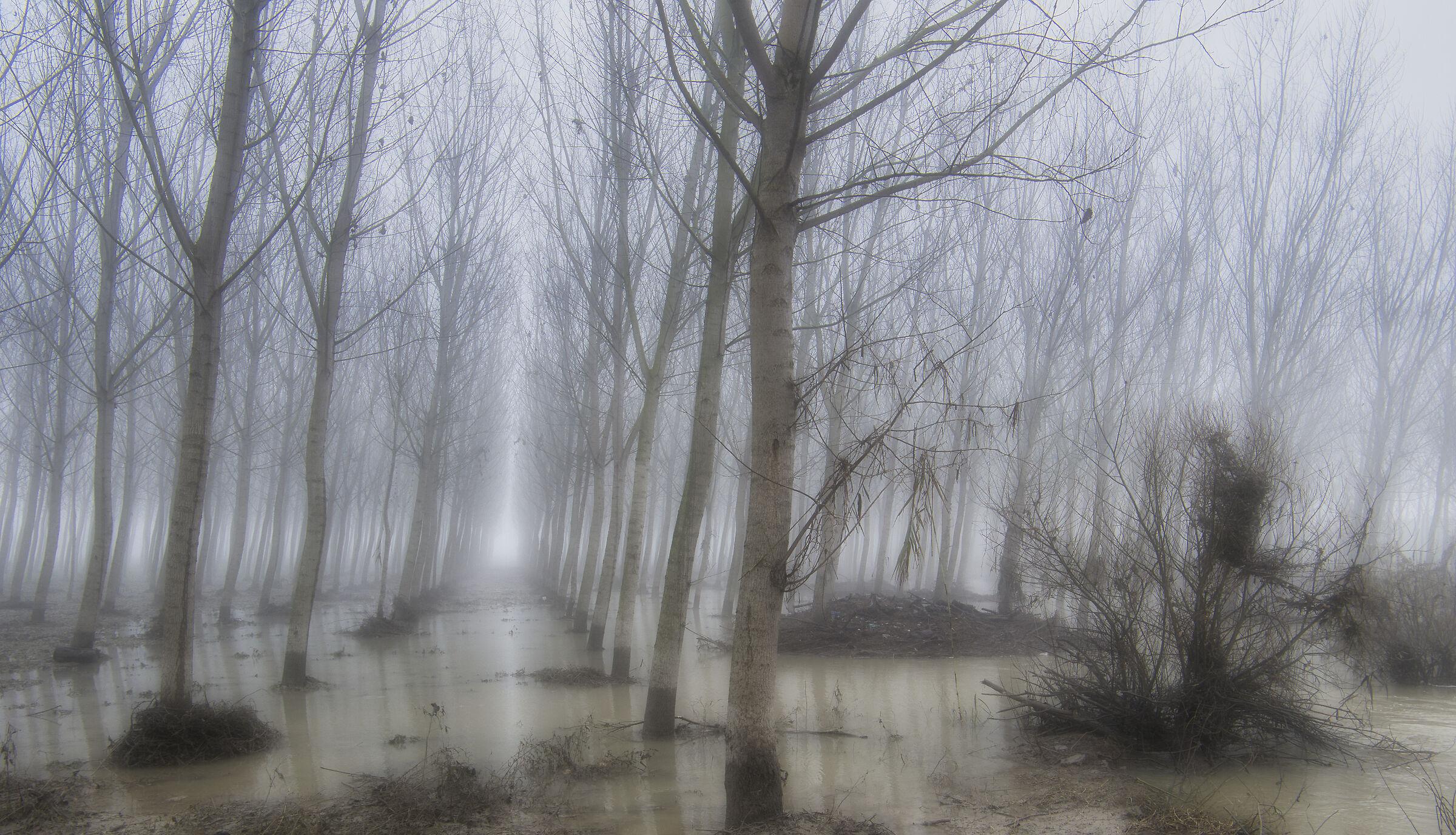 Pioppi nella nebbia...