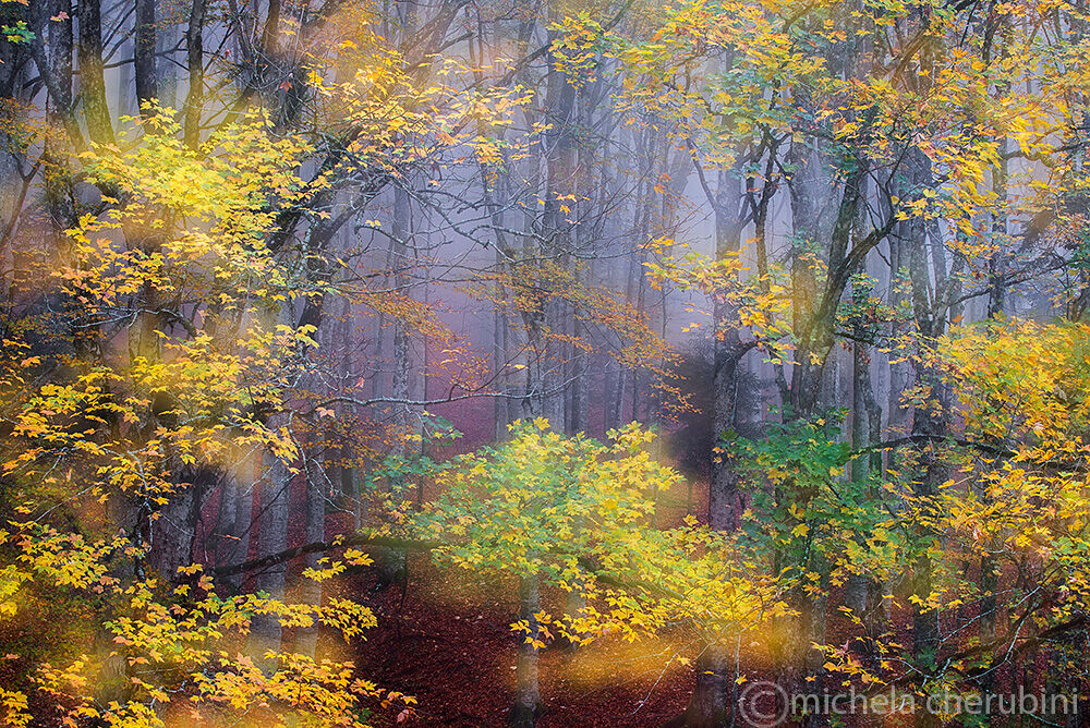 forests in Casentine...