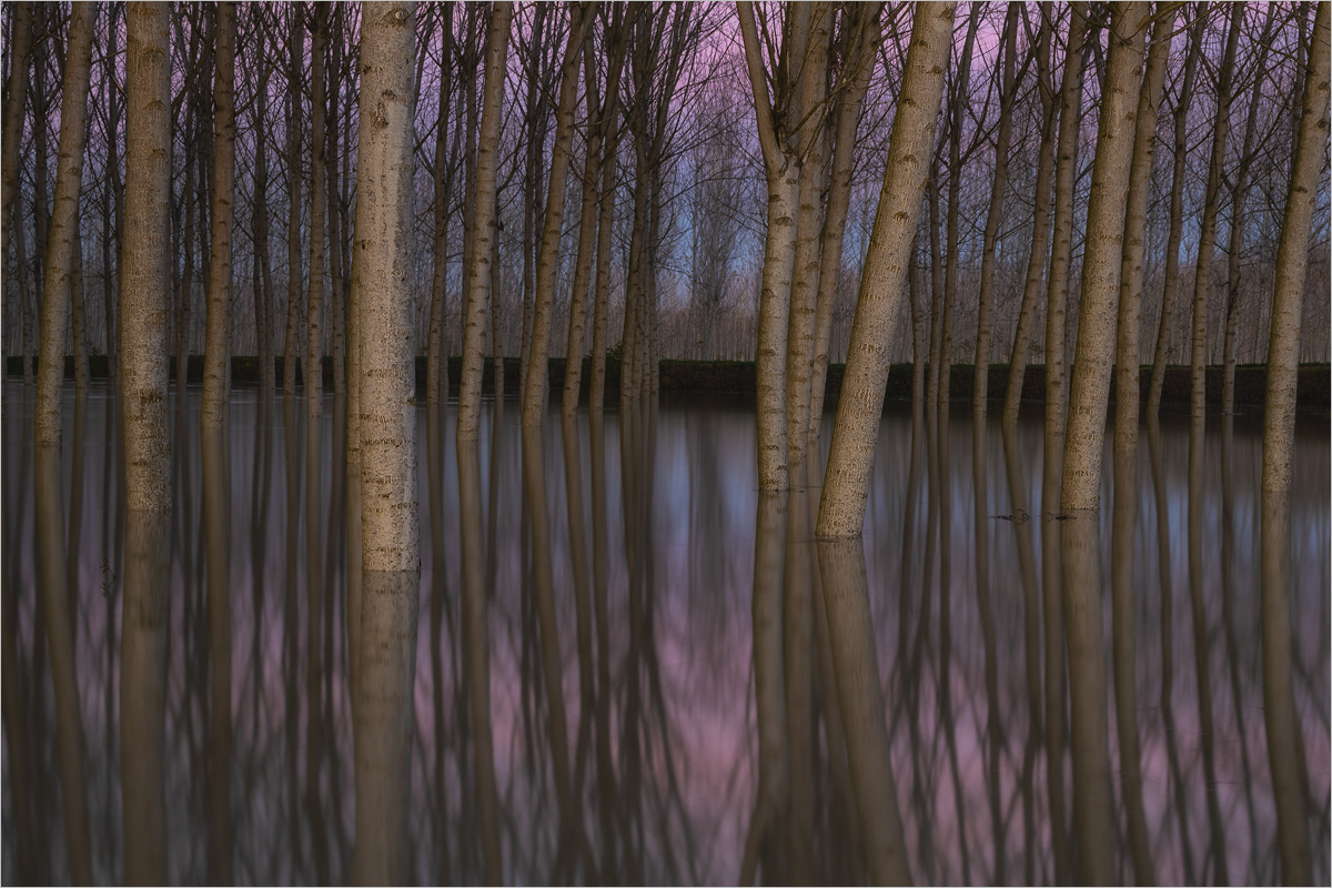 Purple Stillness, Outst....