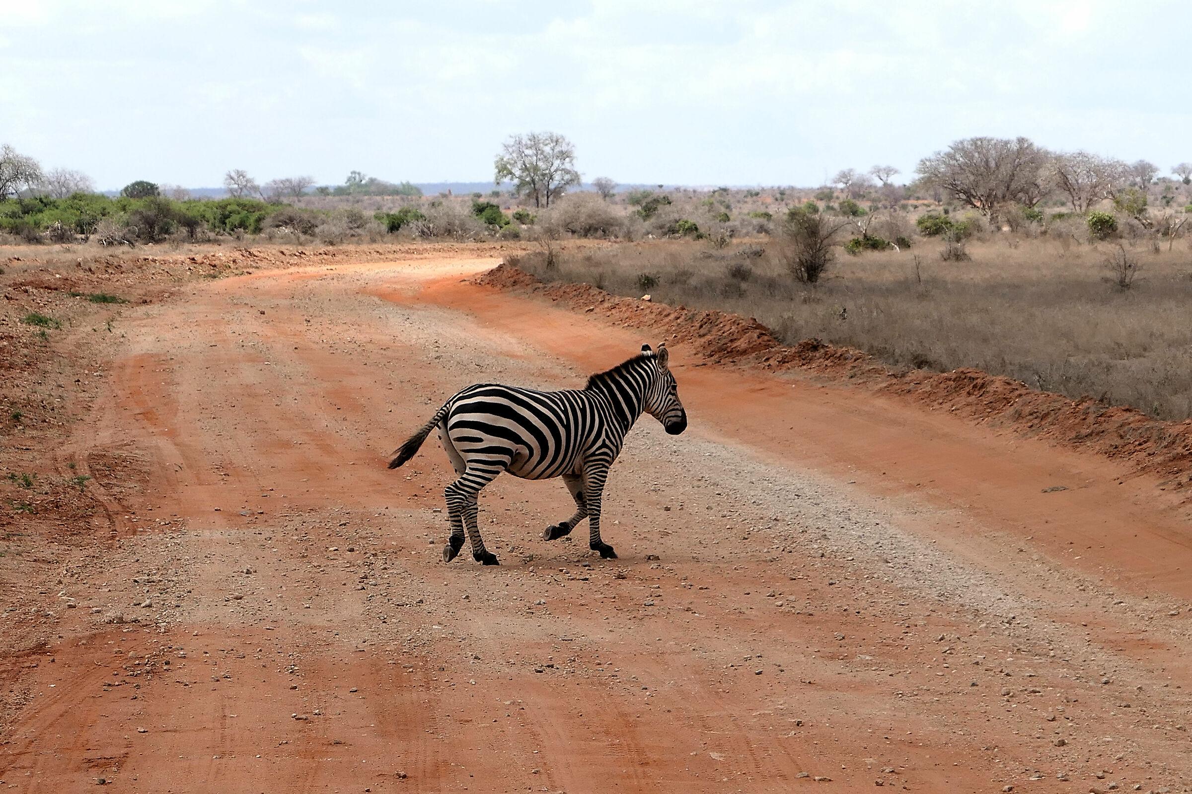 Zebra cross...