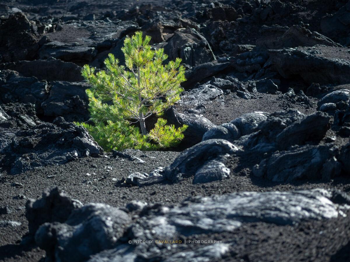 Etna - Life...
