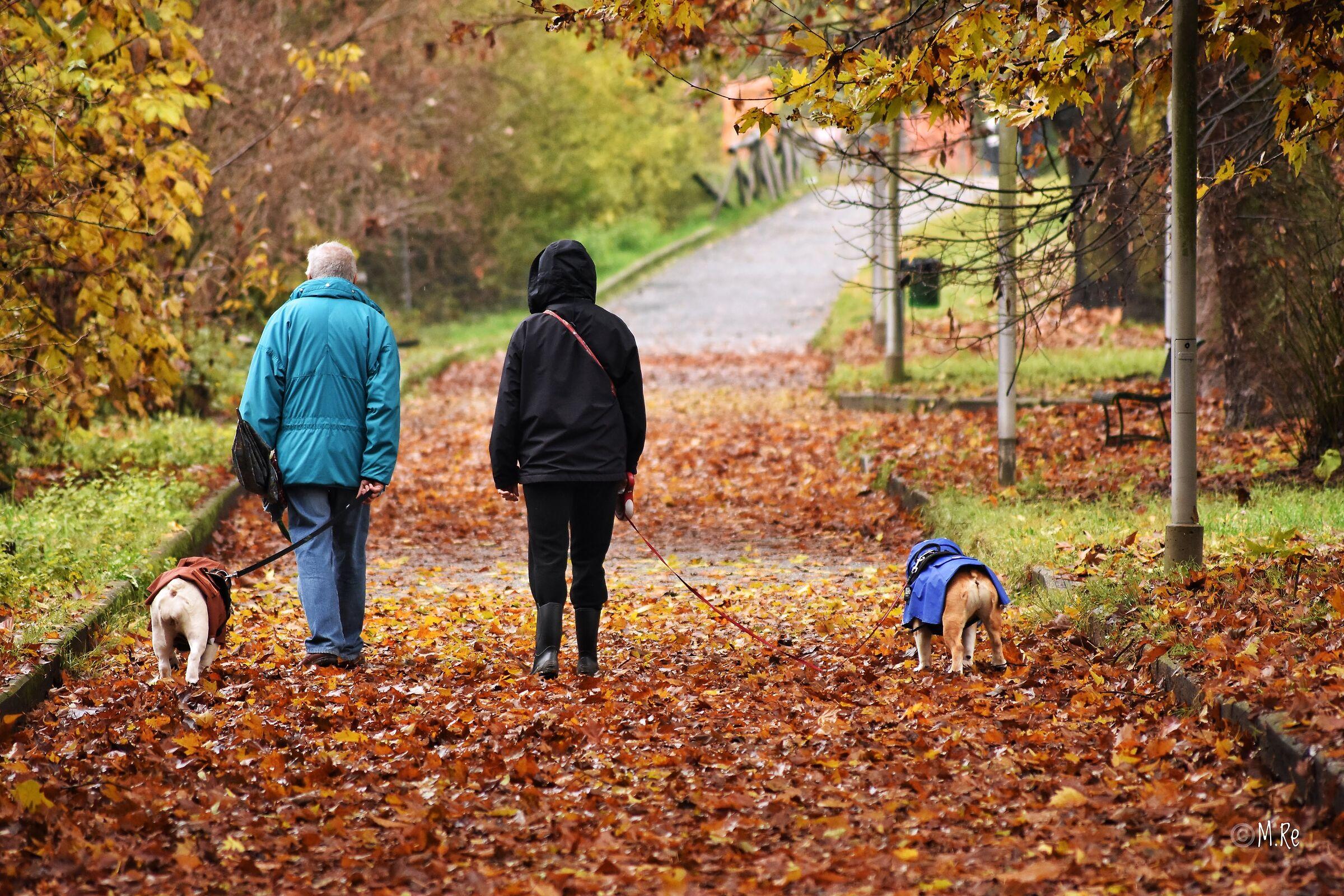 Autumn Walk...
