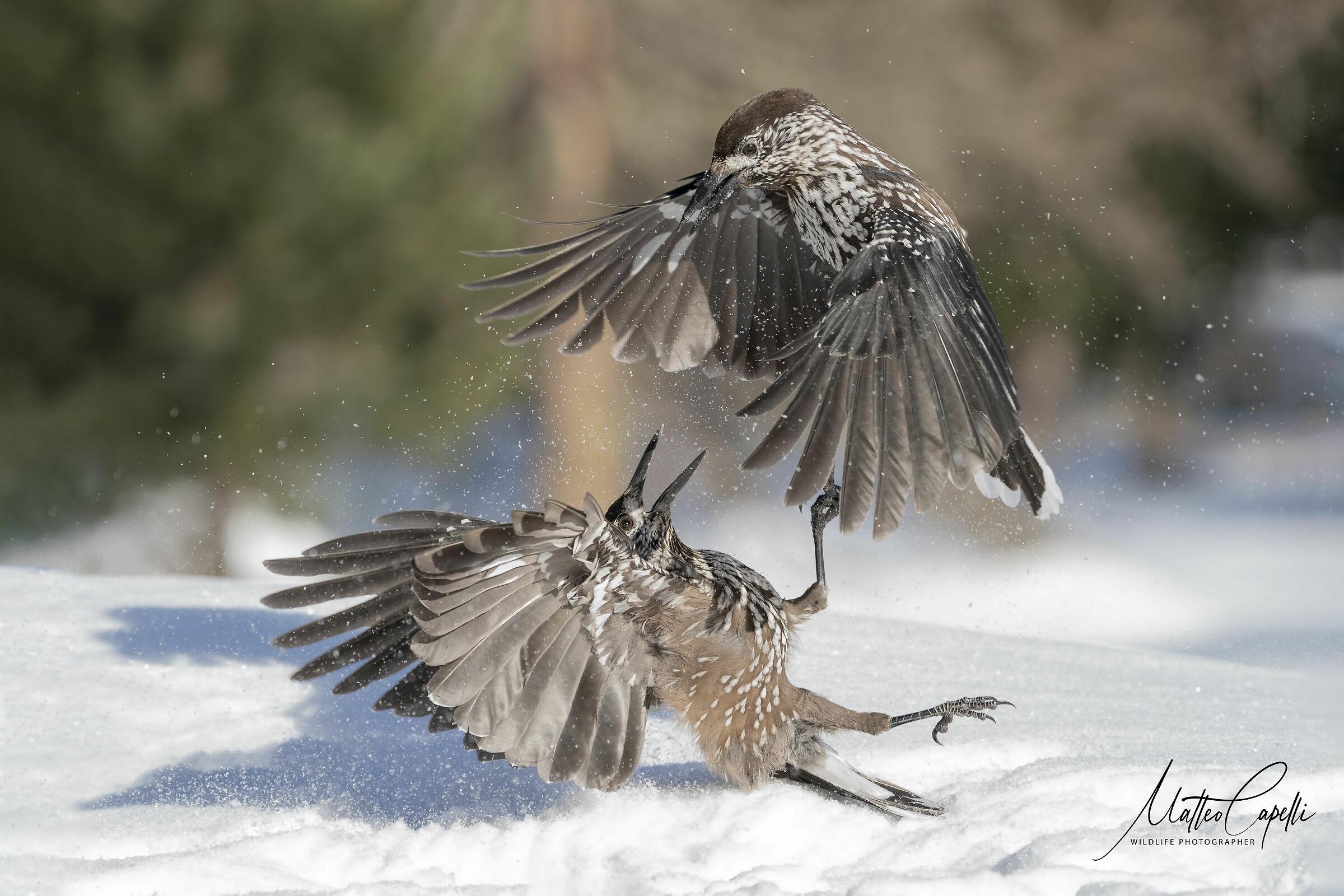 Attack!!!...